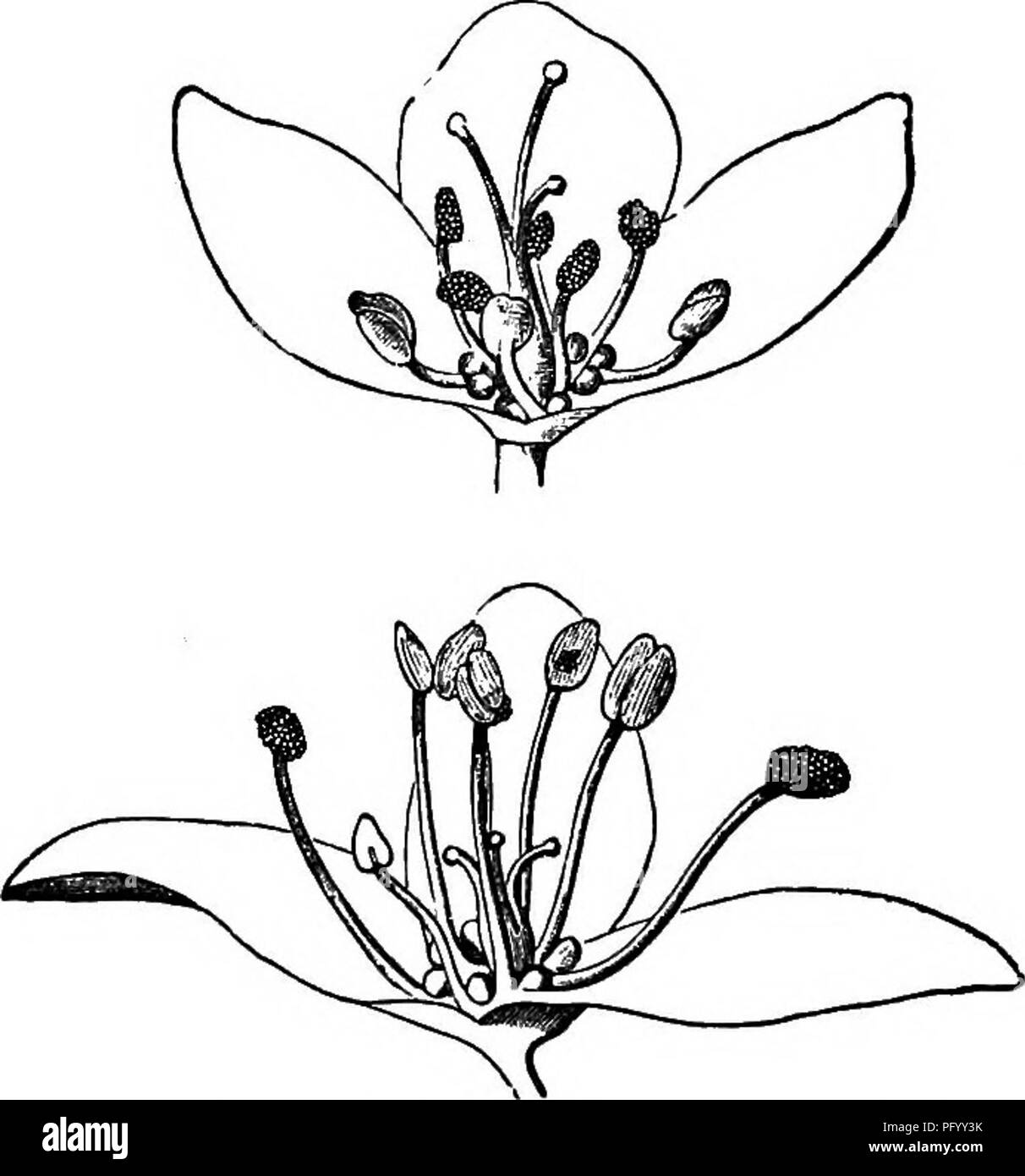 a9efee66db Plants  Fertilization of plants. 112 HETEROSTYLED DIMORPHIC PLANTS. Chap.  IlL pollen in the same manner from other long-styled plants