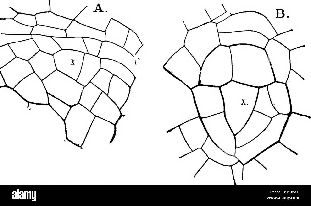 The structure and development of mosses and ferns