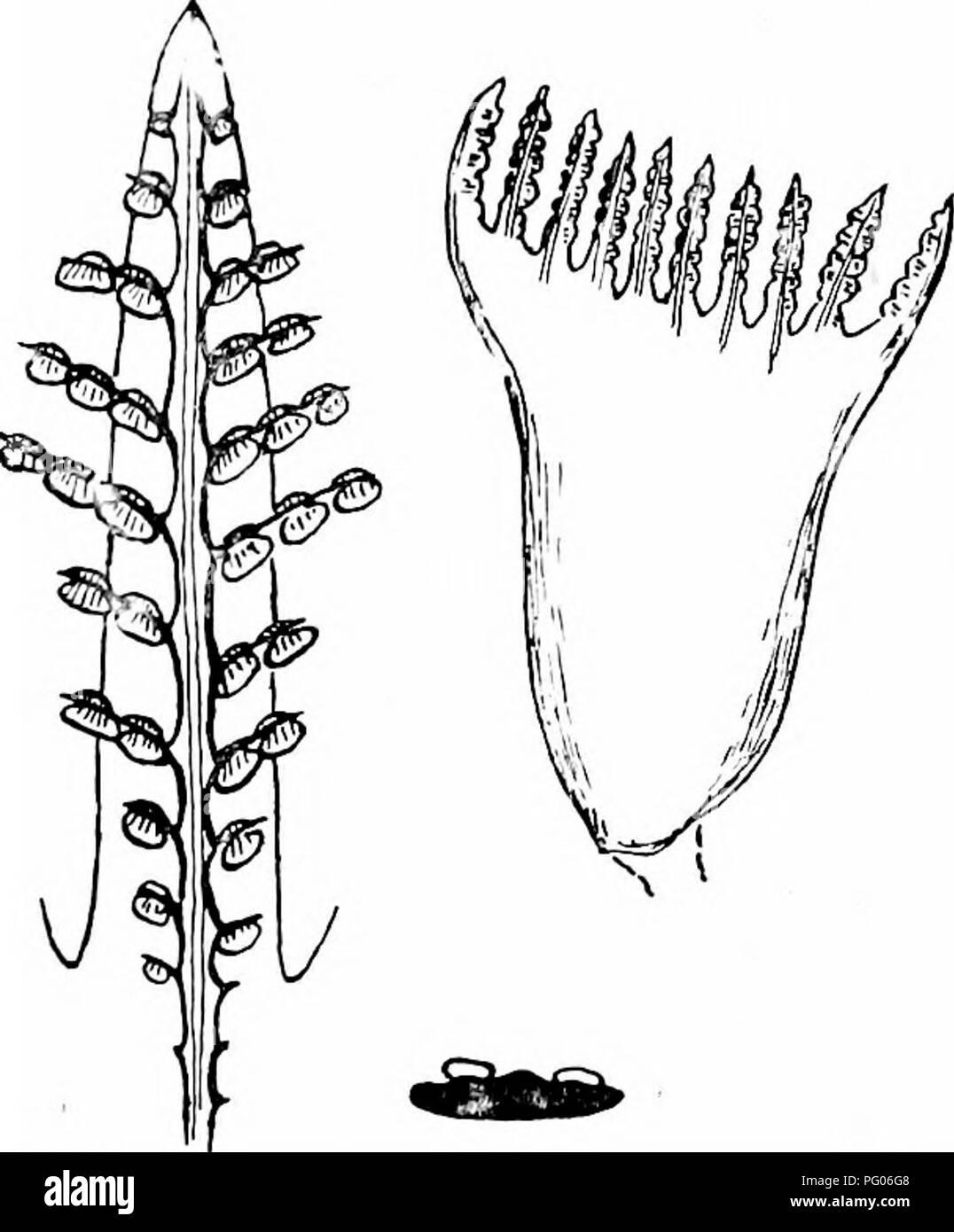 Unisexual flowers diagrams