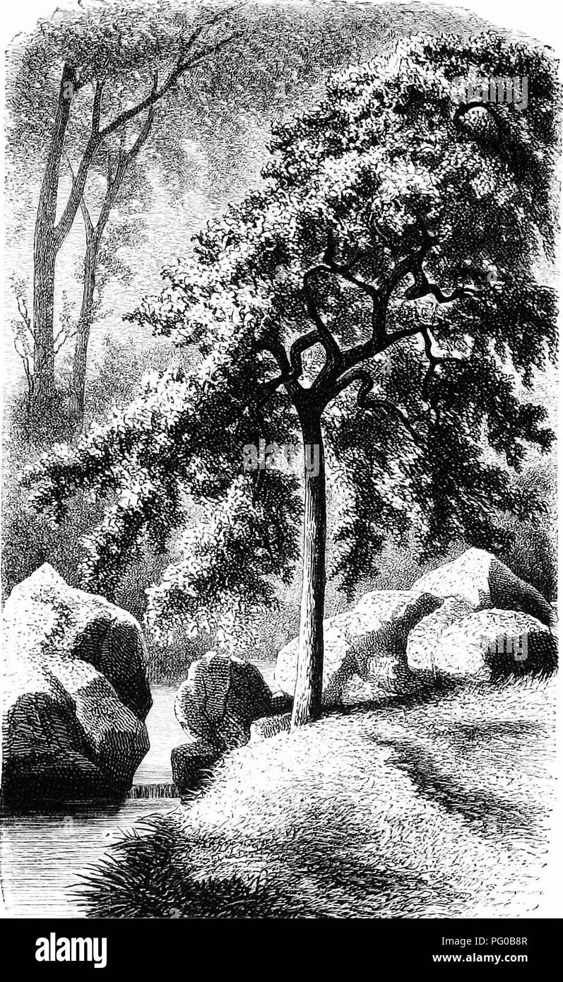 . Our woodland trees . Trees; Trees. OUR WOODLAND TREES. 17. ' The Tree yielding fruit wliose seed was in itself.' i^age IJ.. Please note that these images are extracted from scanned page images that may have been digitally enhanced for readability - coloration and appearance of these illustrations may not perfectly resemble the original work.. Heath, Francis George, 1843-1913. London : Sampson Low, Marston, Searle, & Rivington - Stock Image
