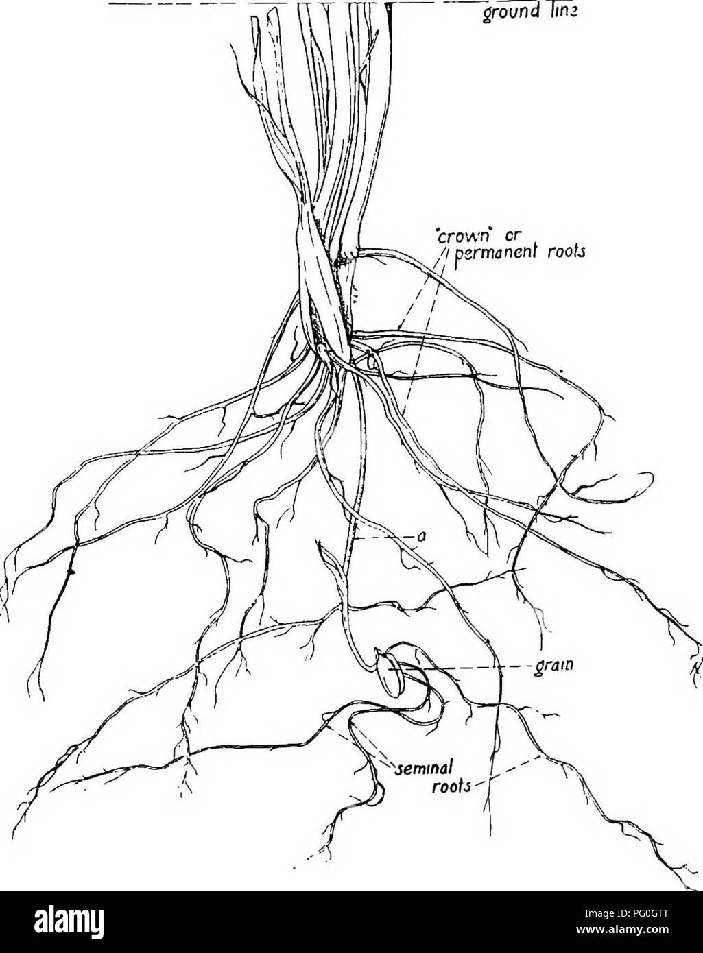 Plant Roots Below Ground Stock Photos & Plant Roots Below