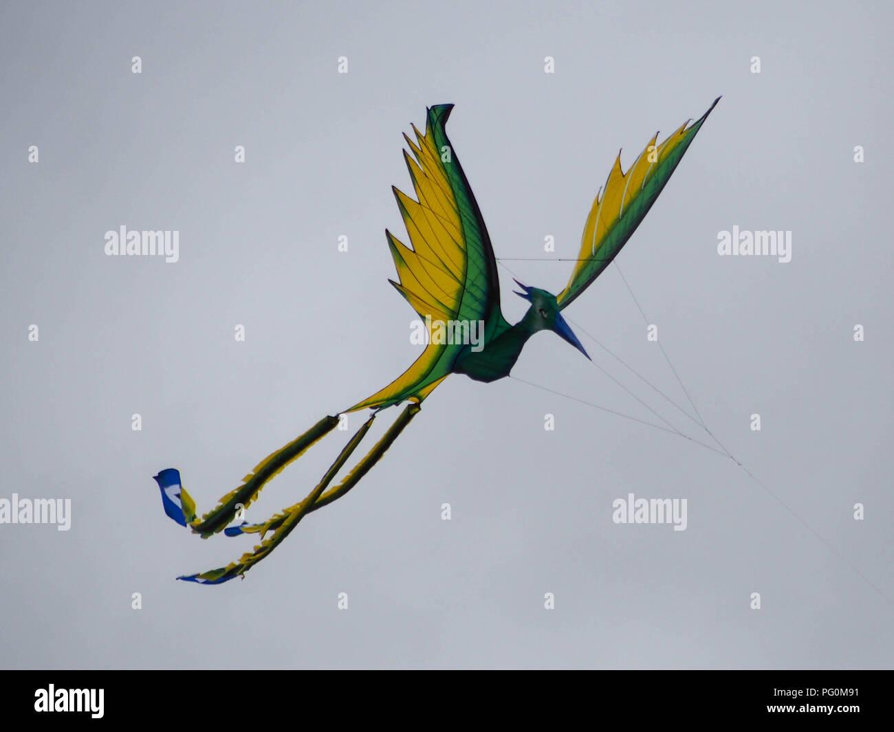 Stork Kites flying at Portsmouth International Kite Festival, England - Stock Image