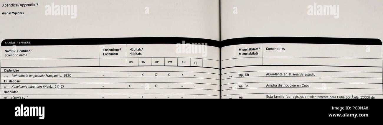 . Cuba : Parque Nacional la Bayamesa. Natural history; National parks and reserves; Ecological assessment (Biology); Wildlife conservation. Ap^ndice/Appendix 7 Arafias/Spiders. Linyphiidae 017 Florinda coccinea (Hentz, 1850) Frontinella sp.' Lycos idae Lycosa sp. Oxyopidae Peucetia vihdans (Hentz, 1832) Anopsicus sp.* Leptopholcus delicatulus Franganillo. 193Q Modisimus pavidus Bryant, 1940* Physocyclus globosus (Taczanowski, 1873) Agobardus prominens Bryant, 1940' ojs Anasaitis sp. OJ7 Menemerus bivittatus (Dufour, 1831)' Phidippus regius C.L. Koch, 1846* Sidusa turquinensis Bryant, 1940 Silo - Stock Image