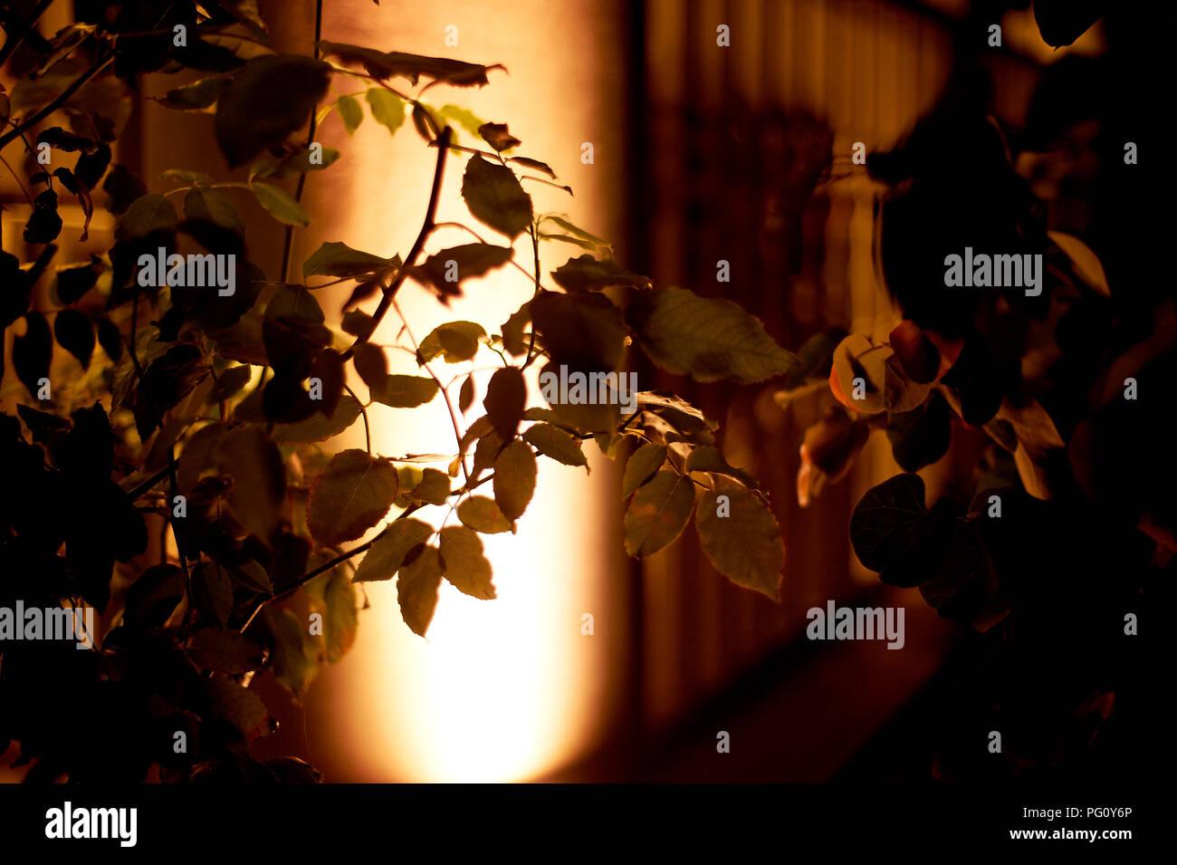 Foliage with bright neon night illumination.Abstract background - Stock Image