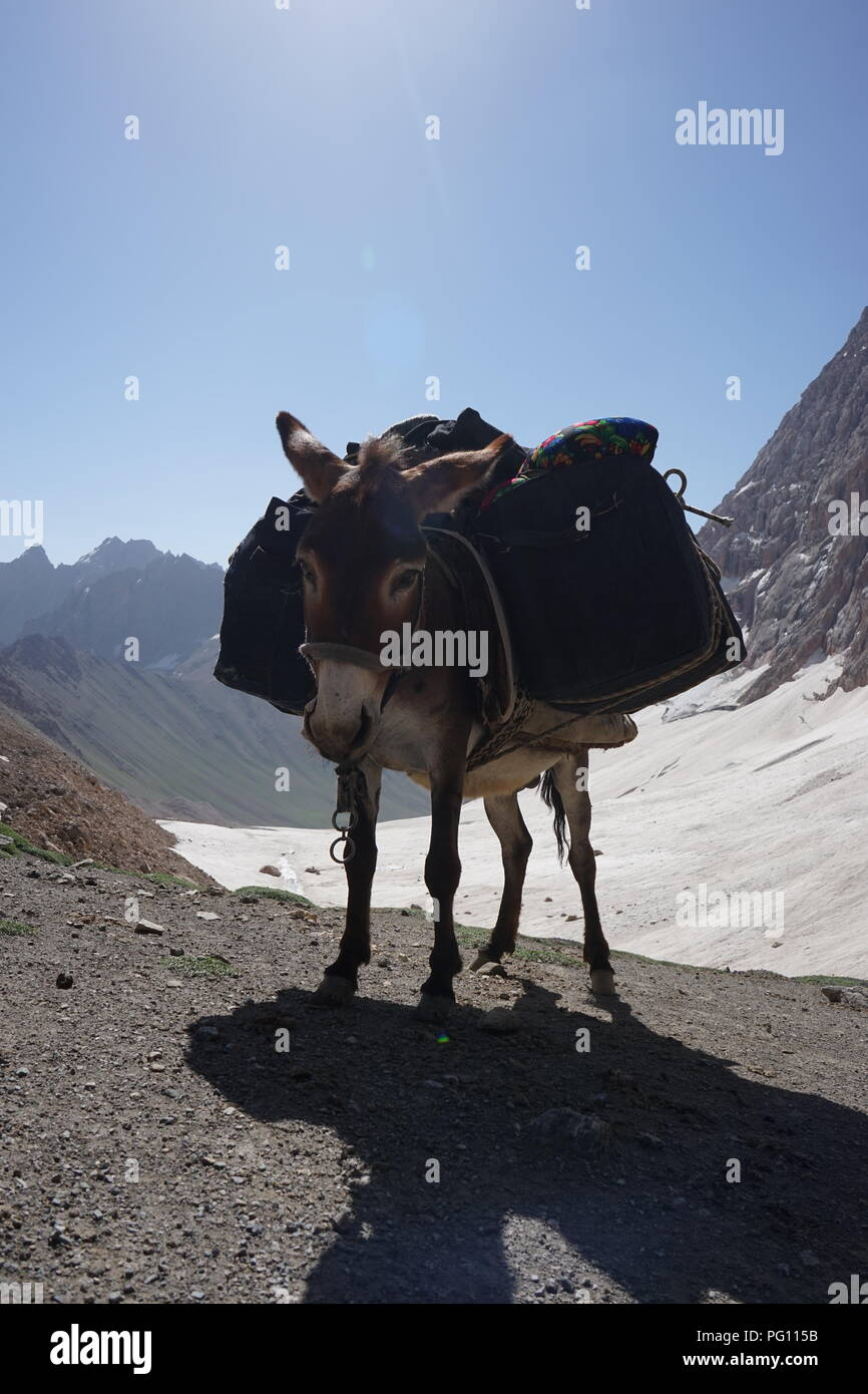 Donkey carrying bags crossing the mountain pass in Fann Mounains, Tajikistan - Stock Image