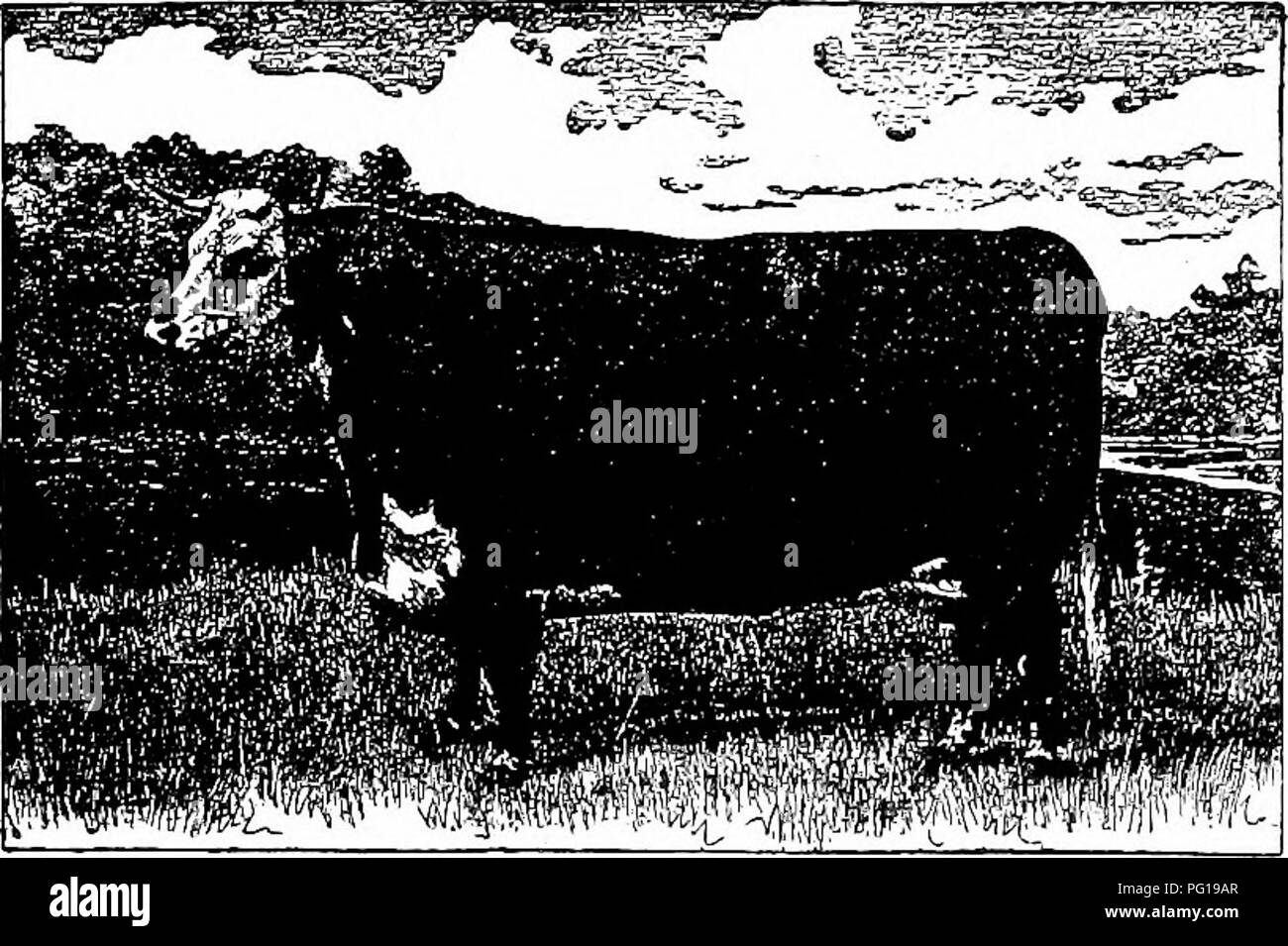 """. History of Hereford cattle : proven conclusively the oldest of improved breeds . Hereford cattle. HISTORY OF HEREFORD CATTLE 325 the best Hereford at Birmingham (fat show), 1879; first prize and champion prize for the best Hereford at the Smithfield club (fat show), London, 1879. Total of her winnings, $3,250. FIVE HUNDRED DOLLARS BDTCHEE's PEIZE. (aN OI^EN LETTER.) No. 3 Board of Trade Bldg., Chicago, HI., Sept. 25. ;.^;: """"To Whom it May Concern: Some of the ;i%eeders of Hereford cattle have subscribed :'$500, which they have directed me to deposit jwith the treasurer of the Chicago Fa - Stock Image"""