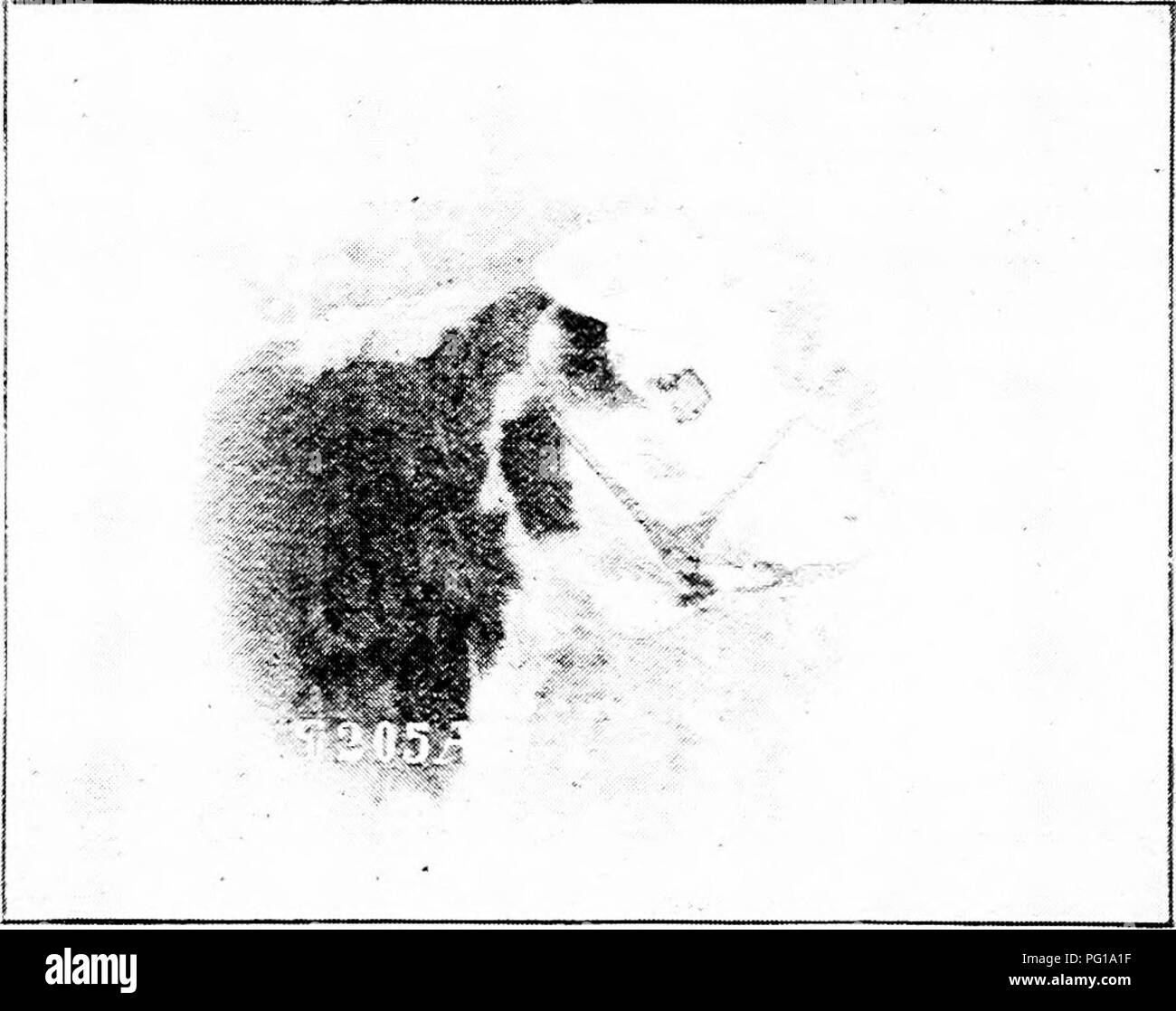 S M A R T Black and White Stock Photos & Images - Alamy