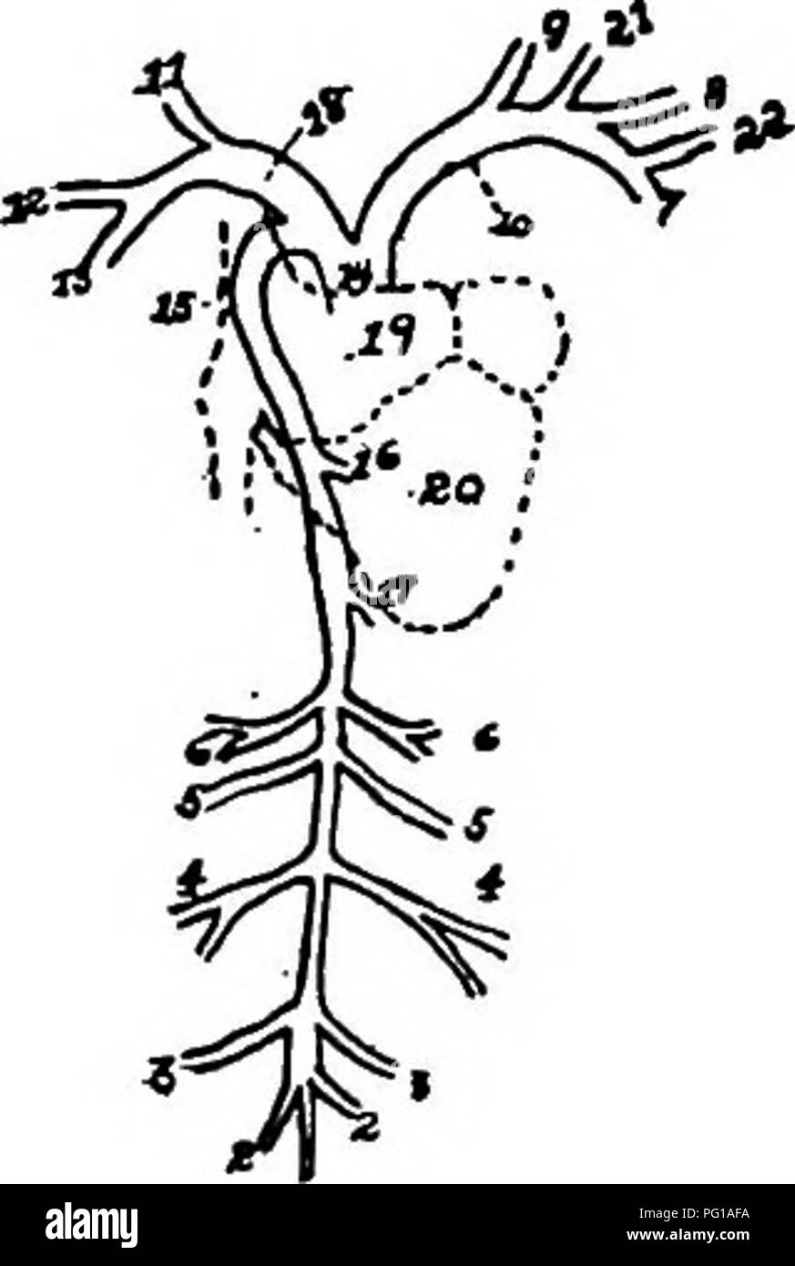 The anatomy of the domestic fowl . Domestic animals; Veterinary ...