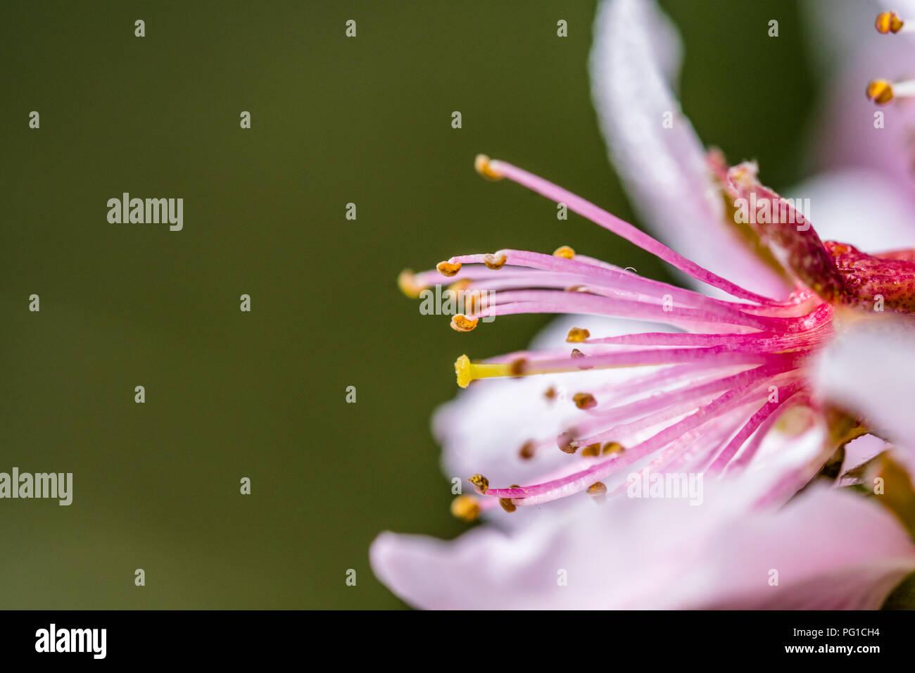 Nice Pink Flowers Stock Photos Nice Pink Flowers Stock Images Alamy