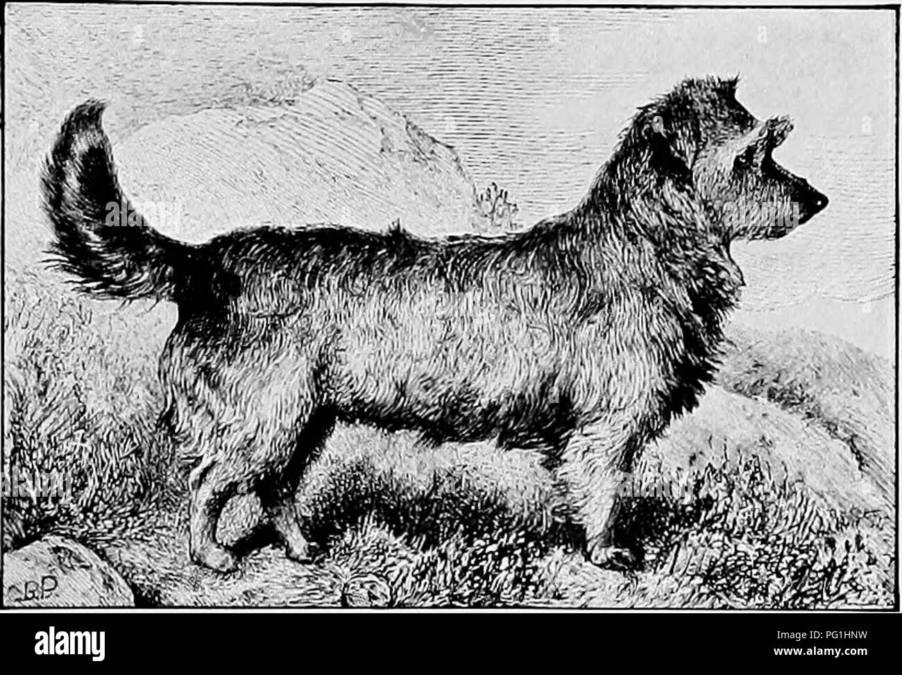 """. The new book of the dog; a comprehensive natural history of British dogs and their foreign relatives, with chapters on law, breeding, kennel management, and veterinary treatment. Dogs. 405 CHAPTER XLIII. THE SKYE TERRIER. BY CAPTAIN W. WILMER AND R. LEIGHTON. """" From the dim shieling on the misty island, Mountains divide us and a world of seas ; Yet still our hearts are true, our hearts are Highland, And we in dreams behold the Hebrides."""" THAT the Skye Terrier should be called """" the Heavenly Breed """" is a tribute to the favour in which he is held by his admirers. Certainly  Stock Photo"""
