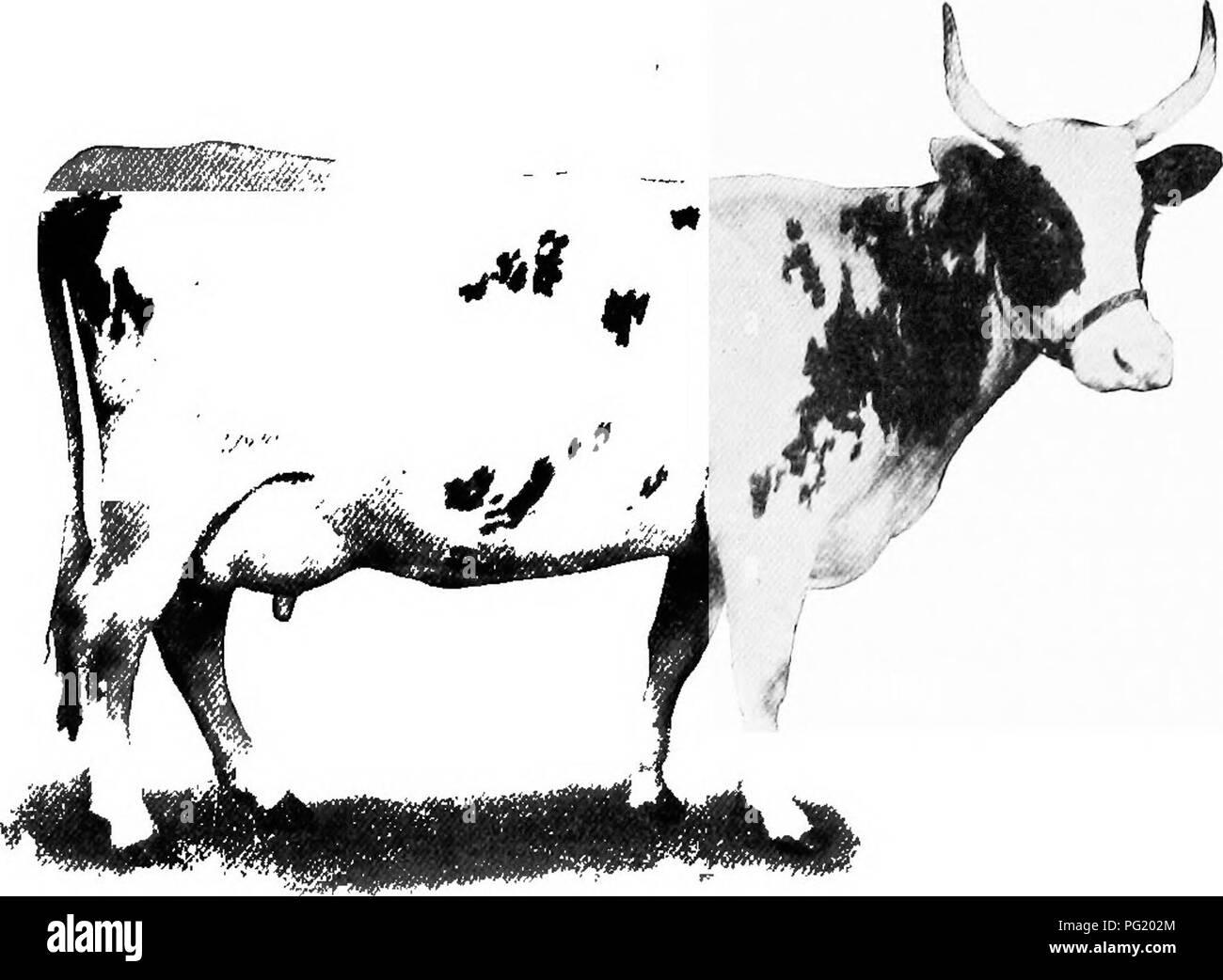Breeding cows hiring a breeding cow part