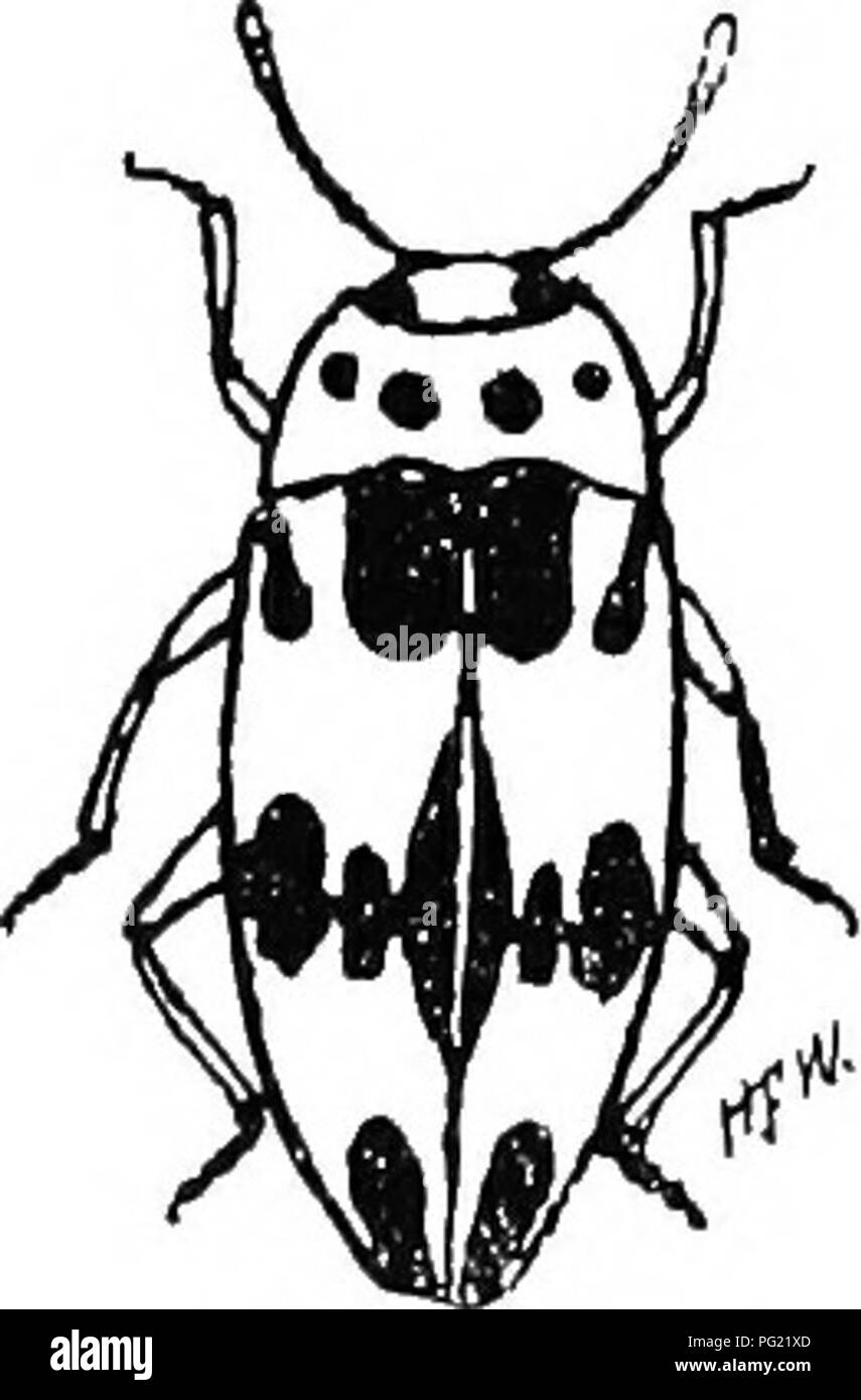 3219 stock photos 3219 stock images alamy Hennessey Venom GT an illustrated descriptive catalogue of the coleoptera or beetles exclusive of the rhynchophora