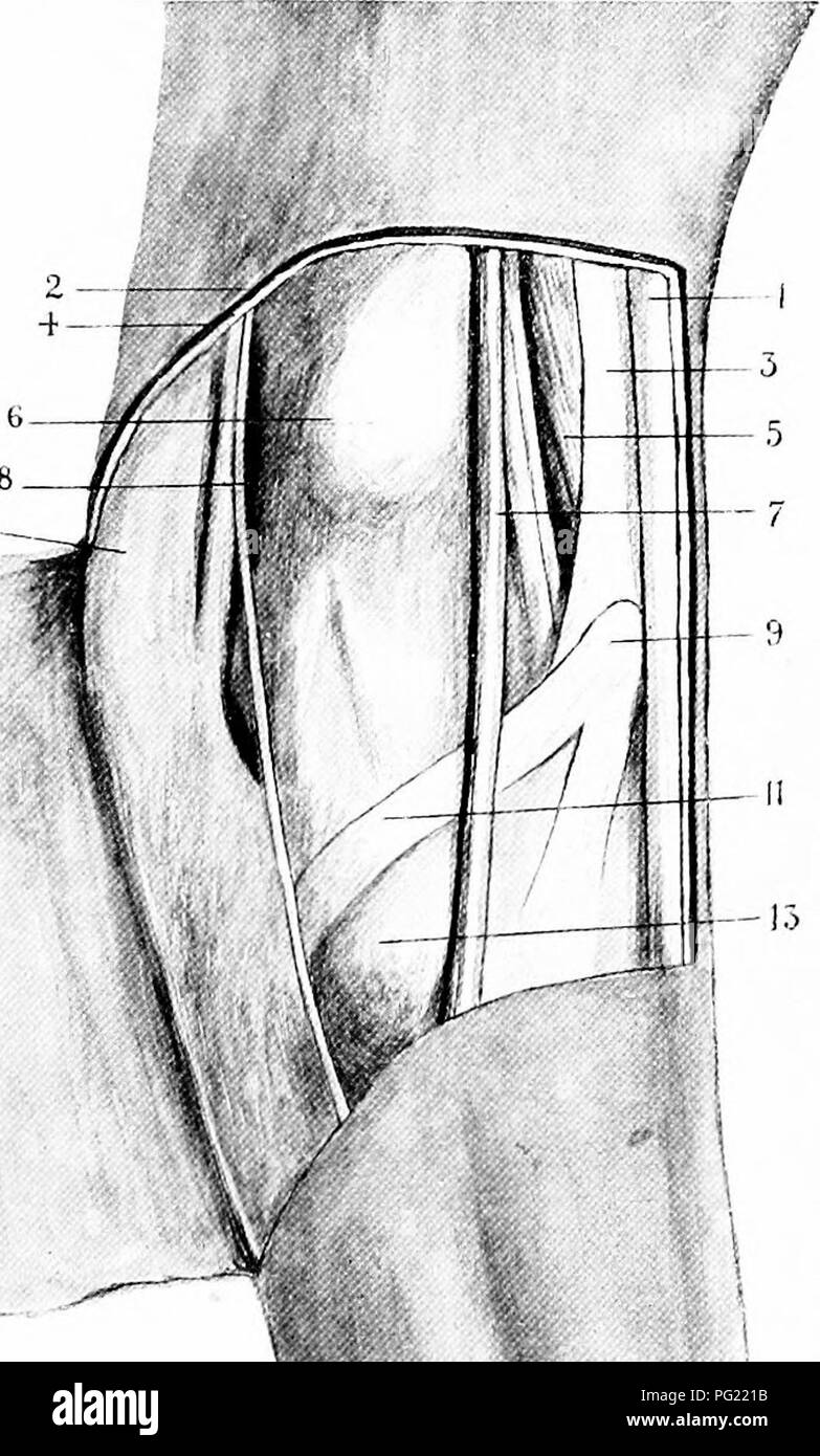 The Surgical Anatomy Of The Horse Horses 10 T S Plate