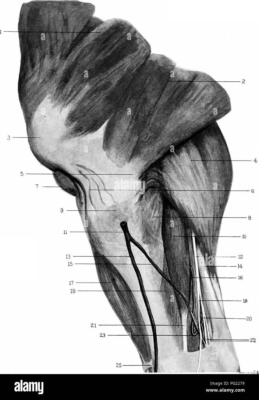Horse Anatomy Internal Anatomy Horse Stock Photos & Horse Anatomy ...