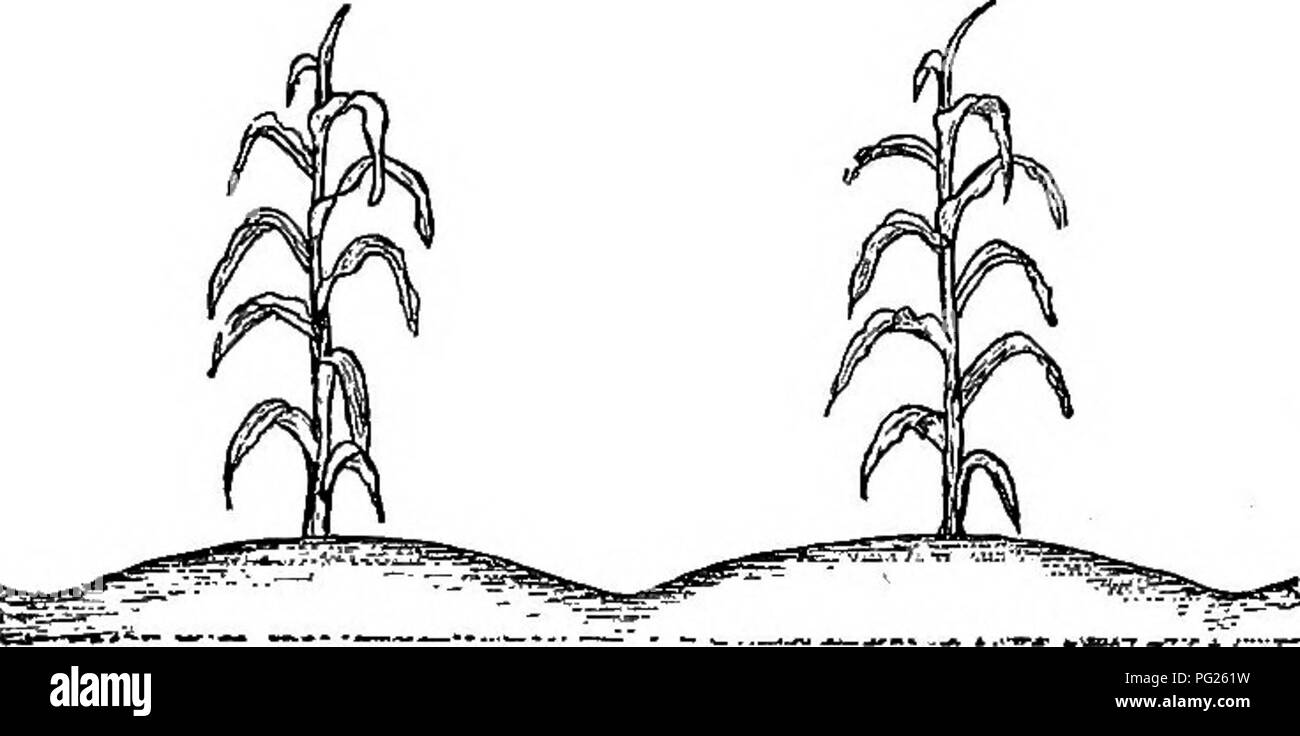 seed drill black and white stock photos & images alamy  southern field crops (exclusive of forage plants) agriculture corn tillage 187