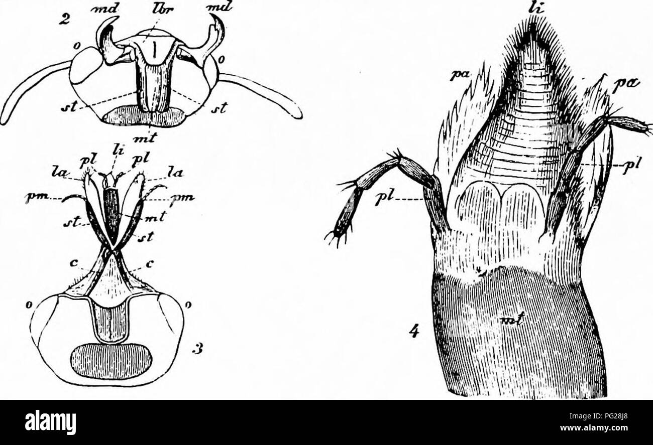 Handbook of flower pollination based upon hermann mullers work handbook of flower pollination based upon hermann mullers work the fertilisation of flowers by insects fertilization of plants ccuart Gallery