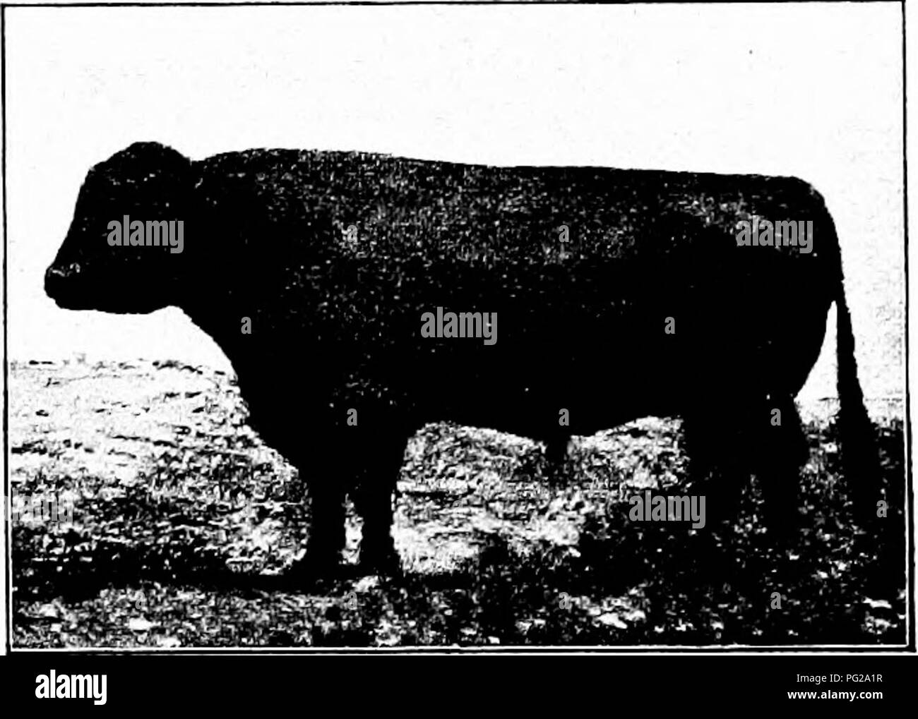 Types And Breeds Of Farm Animals Livestock The Galloway