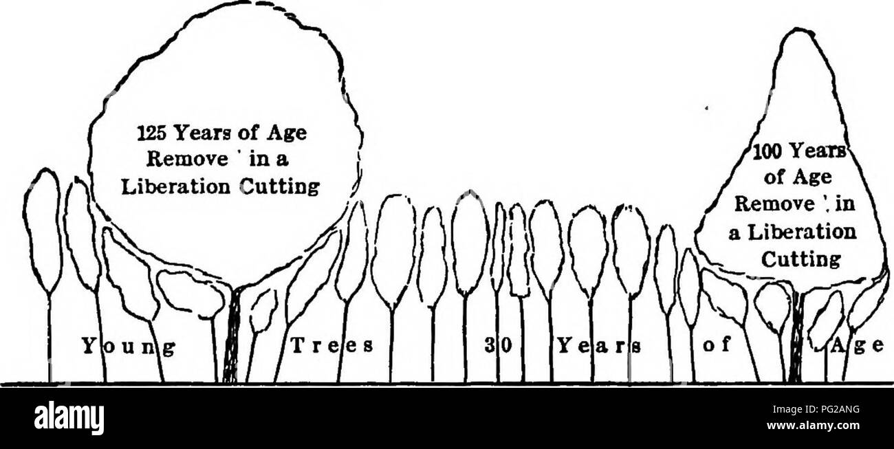 The practice of silviculture with particular reference to its the practice of silviculture with particular reference to its application in the united states forests and forestry fig ss ccuart Image collections