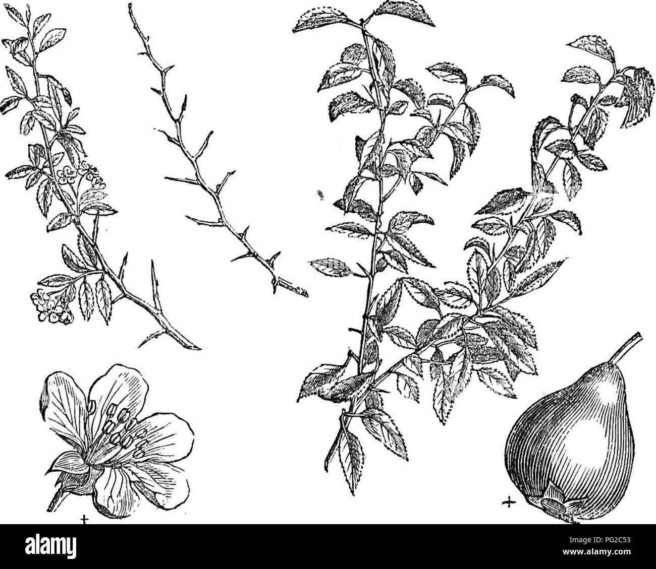 Ic 1 And 2 Stock Photos Images Alamy The Iron Bar In Uquot Shape With Dimensions As Shown Diagram Trees Shrubs An Abridgment Of Arboretum Et Fruticetum Britannicum Containing