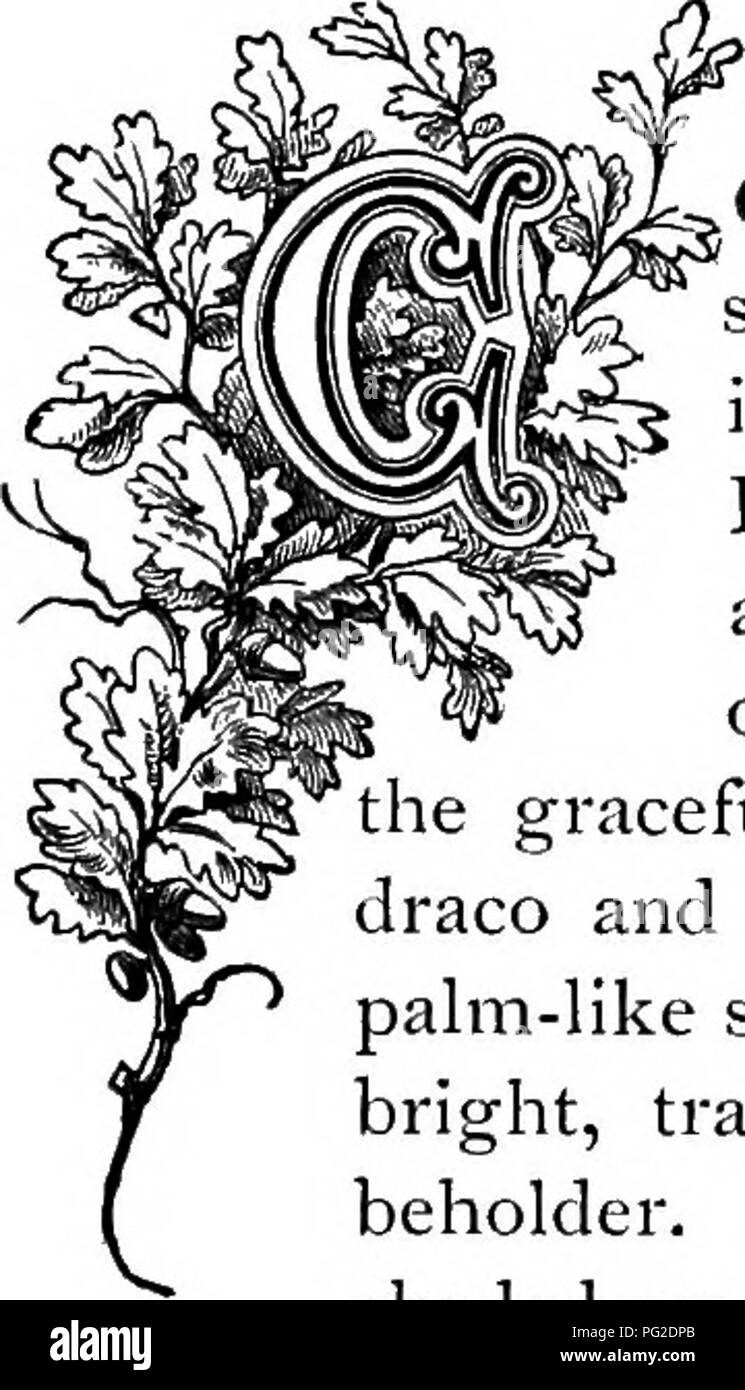 . The floral kingdom : its history, sentiment and poetry : A dictionary of more than three hundred plants, with the genera and families to which they belong, and the language of each illustrated with appropriate gems to poetry . Flower language; Flowers in literature. OMMONLY called Burning Bush, from the bright-red leaves of some of the varieties, the Dracsena has long been in cultivation, and is very generally admired as one of the most conspicuous of the Liliaceous family. The gum of commerce, called dragon's blood, is a product of this and some allied plants, being obtained by incision of  - Stock Image