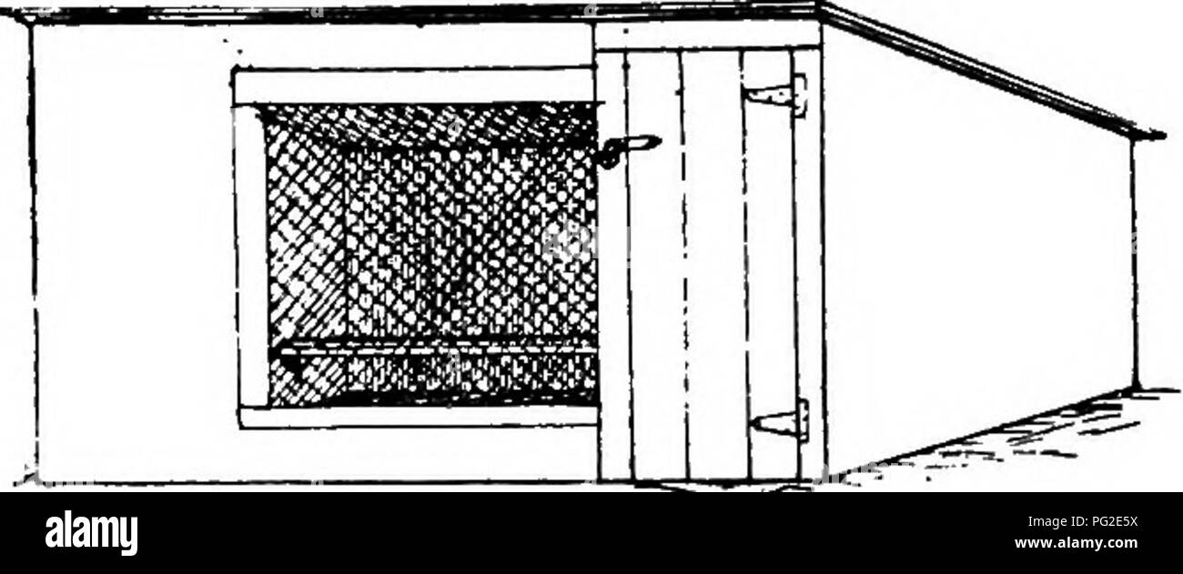. Poultry-craft. A text-book for poultry keepers ... Poultry. 5S PO UL TR r- CRAFT. nailed to the lower edges of the top side rails, the laths put on the top, the last lath at the open end being 4 in. from the ends of the side rails ; a single strip of lath is nailed to the lower edge of the bottom side rails 4 in. from the end, and the pen is complete. When coop and pen are placed together, thte ends of the side rails overlap the sides of the coop, and fitting snugly, hold the pen firmly in place. The coop is taken apart by simply taking oflT the top laths, removing braces, and knocking out t - Stock Image