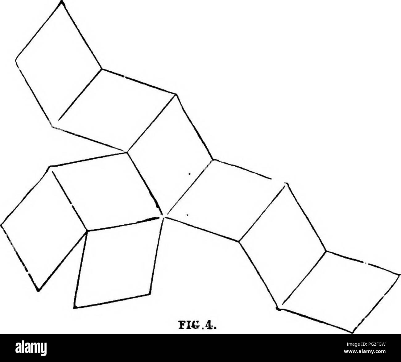. Homes without hands. : Being a description of the habitations of animals, classed according to their principle of construction. Animals. THE HIVE-BEE. 431 lozenge-shaped figure which has just been described, let, him draw upon cardboard nine of them, as is shown in the illustration (fig. 4.) Then let him cut out the figure, and draw his penknife half through the cardboard at all the lines of junction. He will then find that the cardboard will fold into an exact model of a bee-cell, the three lozenges which project from the sides forming the base, and the others the sides. This cell will, of  - Stock Image