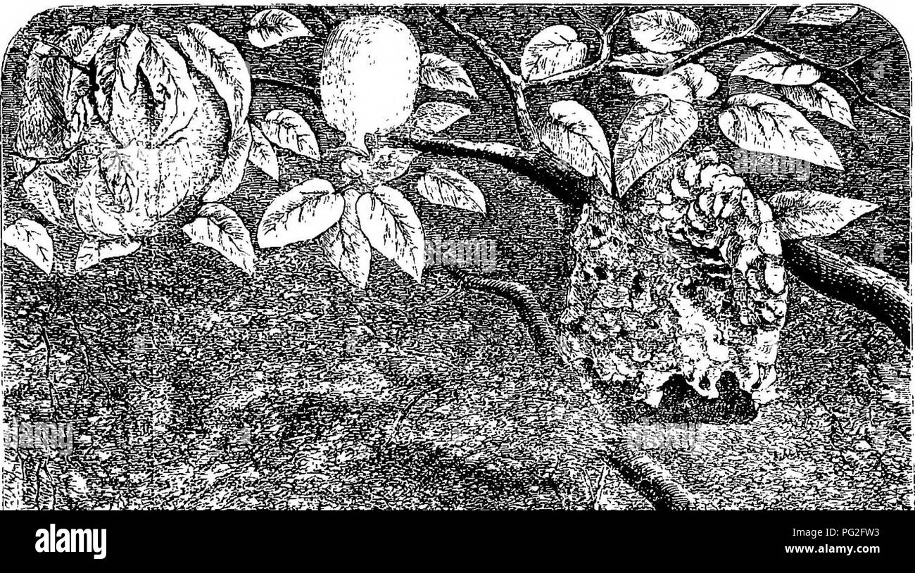 . Homes without hands. : Being a description of the habitations of animals, classed according to their principle of construction. Animals. if^^-y^i^t^^ '' It-:, rf •^*^ m&. Please note that these images are extracted from scanned page images that may have been digitally enhanced for readability - coloration and appearance of these illustrations may not perfectly resemble the original work.. Wood, J. G. (John George), 1827-1889; Keyl, Friedrich Wilhelm, 1823-1871; Smith, E. A. (Edward Alfred); Pearson, G. (George). London : Longmans, Green, and Co. Stock Photo