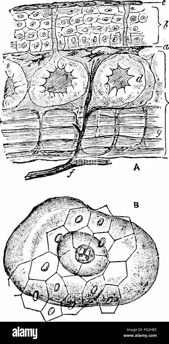 On The Anatomy Of Vertebrates Vertebrates Anatomy Comparative