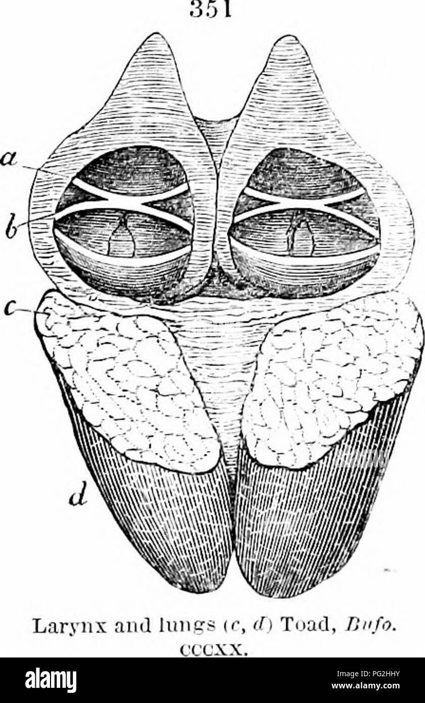 On The Anatomy Of Vertebrates Comparative 1866 528