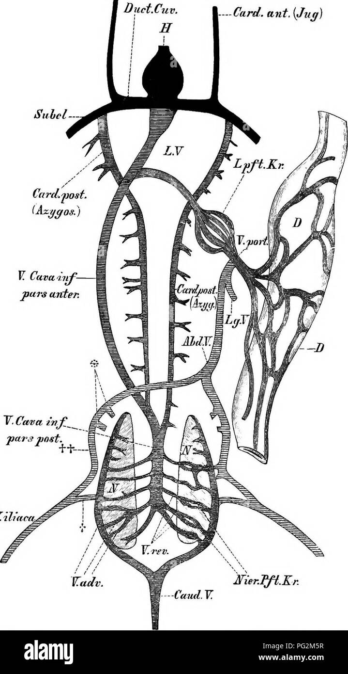 Comparative Anatomy Stock Photos & Comparative Anatomy Stock Images ...