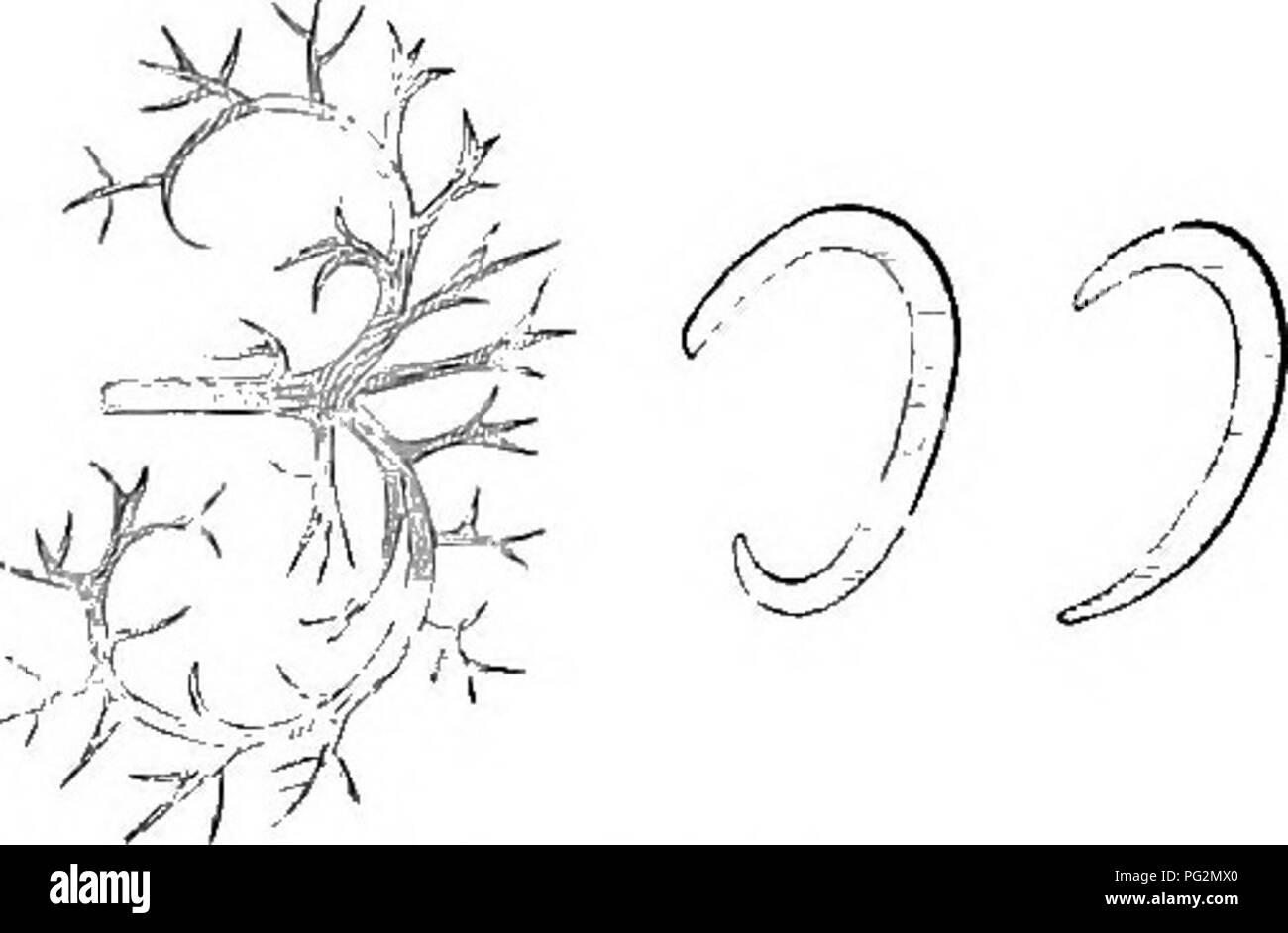 Elements Of The Comparative Anatomy Of Vertebrates Anatomy