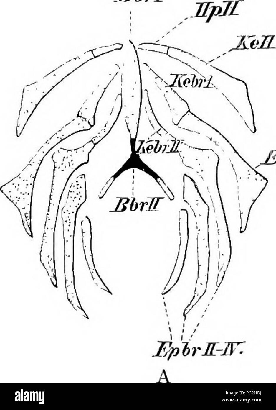 Elements of the comparative anatomy of vertebrates. Anatomy ...