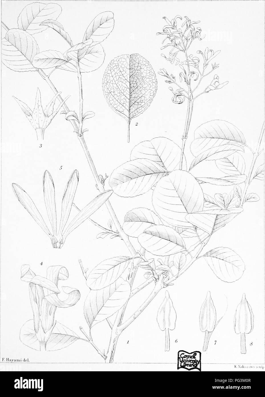 9880310a61dd . Icones plantarum formosanarum nec non et contributiones ad floram  formosanam  or