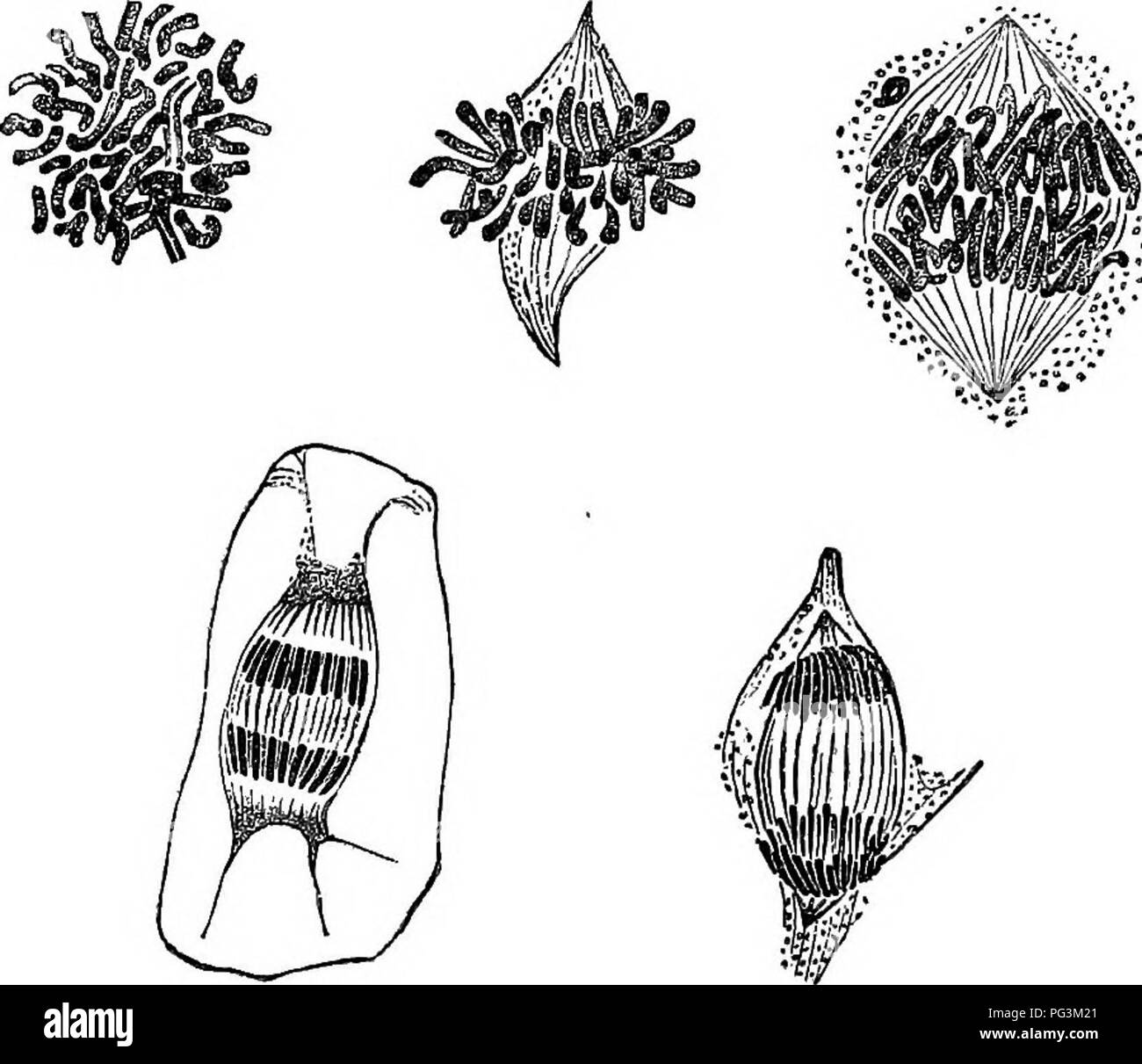 Striation Black and White Stock Photos & Images - Alamy