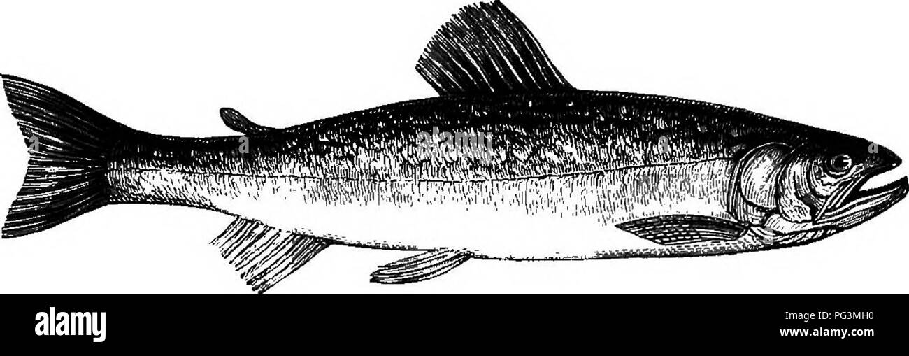 The American Anglers Book Embracing The Natural History Of