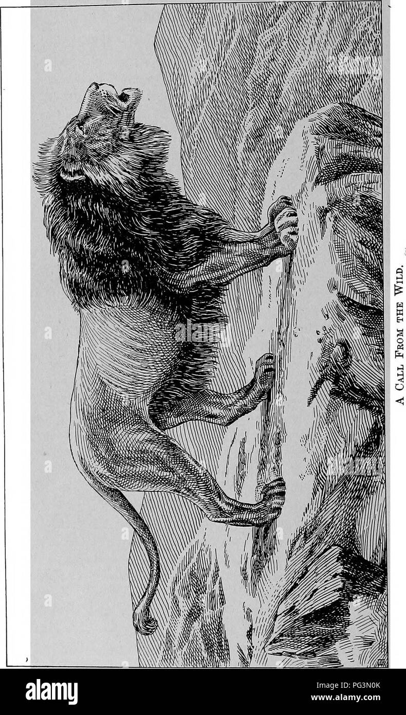 . The fur traders and fur bearing animals. Fur trade; Fur-bearing animals. . Please note that these images are extracted from scanned page images that may have been digitally enhanced for readability - coloration and appearance of these illustrations may not perfectly resemble the original work.. Petersen, Marcus, 1854-. Buffalo, N. Y. , Hammond Press Stock Photo