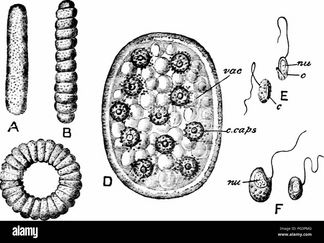 is protozoa a phylum