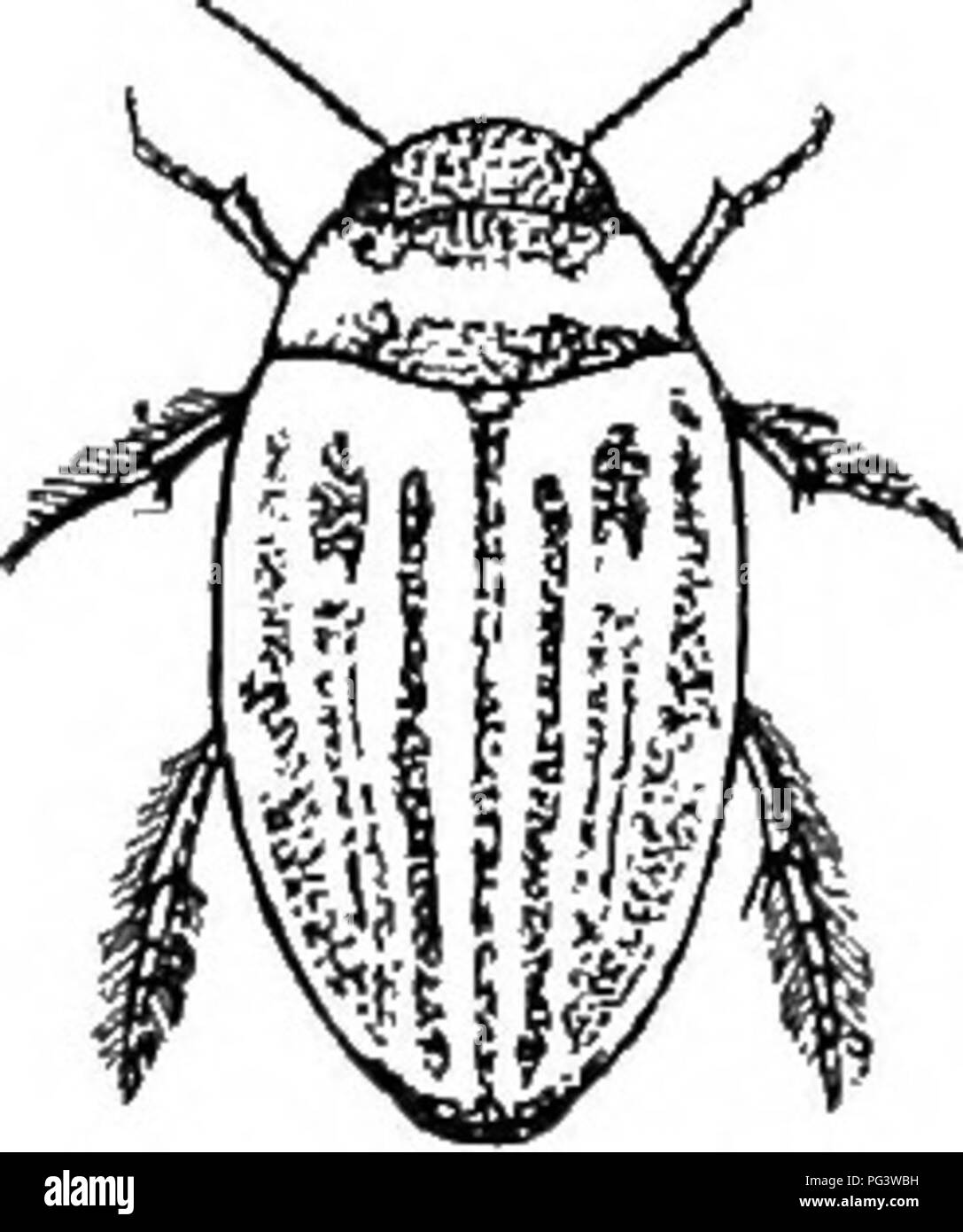 an illustrated descriptive catalogue of the coleoptera or beetles Head-Fi Computer Audio an illustrated descriptive catalogue of the coleoptera or beetles exclusive of the rhynchophora known to occur in indiana with bibliography and