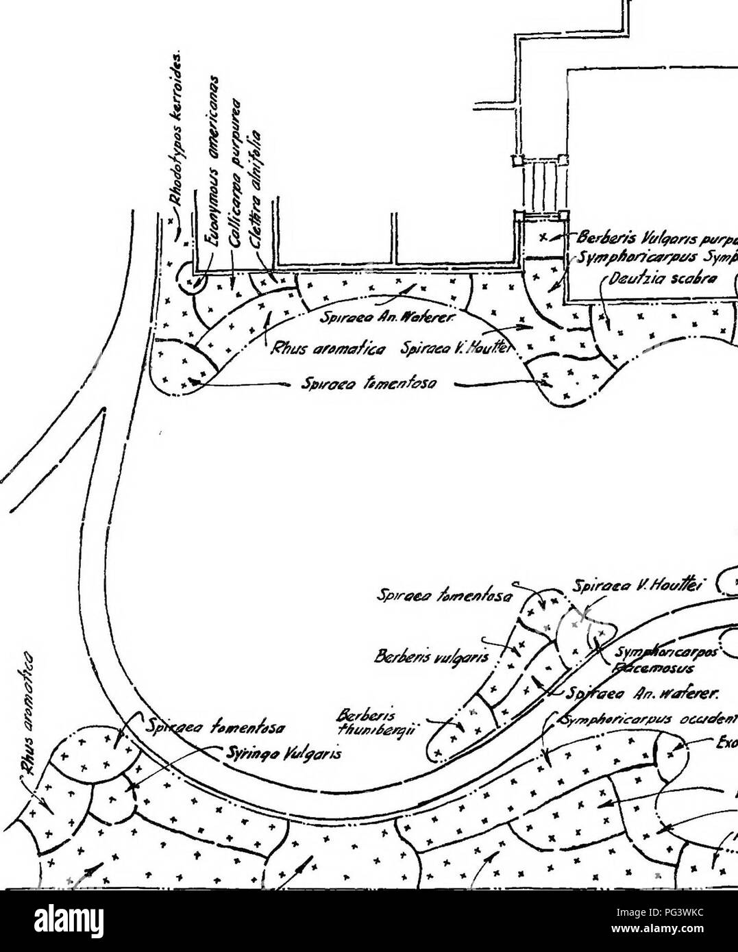 . Design in landscape gardening. Landscape gardening. Sfr/nfa pertice (Fe/syTltia /n^trme^ia ^ Spirveo prun/^/« Figure 43. PLAN FOE THE DEVE]. Please note that these images are extracted from scanned page images that may have been digitally enhanced for readability - coloration and appearance of these illustrations may not perfectly resemble the original work.. Root, Ralph Rodney; Kelley, Charles Fabens, b. 1885. New York, The Century Co. Stock Photo