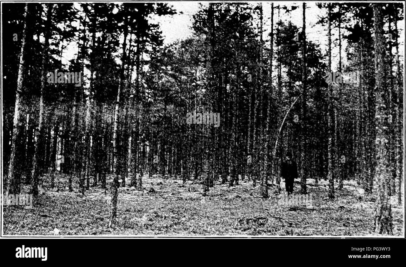 . Impressions of European forestry : letters written during a six months' visit to England and to the continent . Forests and forestry. Research work in forestry is also being car- ried on at the Natural History Museum at Ber- gen, where Prot. Dr. Oscar Hagem is in charge of an experiment station at Softeland. Planta- tions are being made of western American species, Douglas fir and Sitka spruce, which indicate that these species may be found to be adapted for rather general use on the west coasi of central Norway. Various publications have been issued from the museum at Bergen, among them one - Stock Image