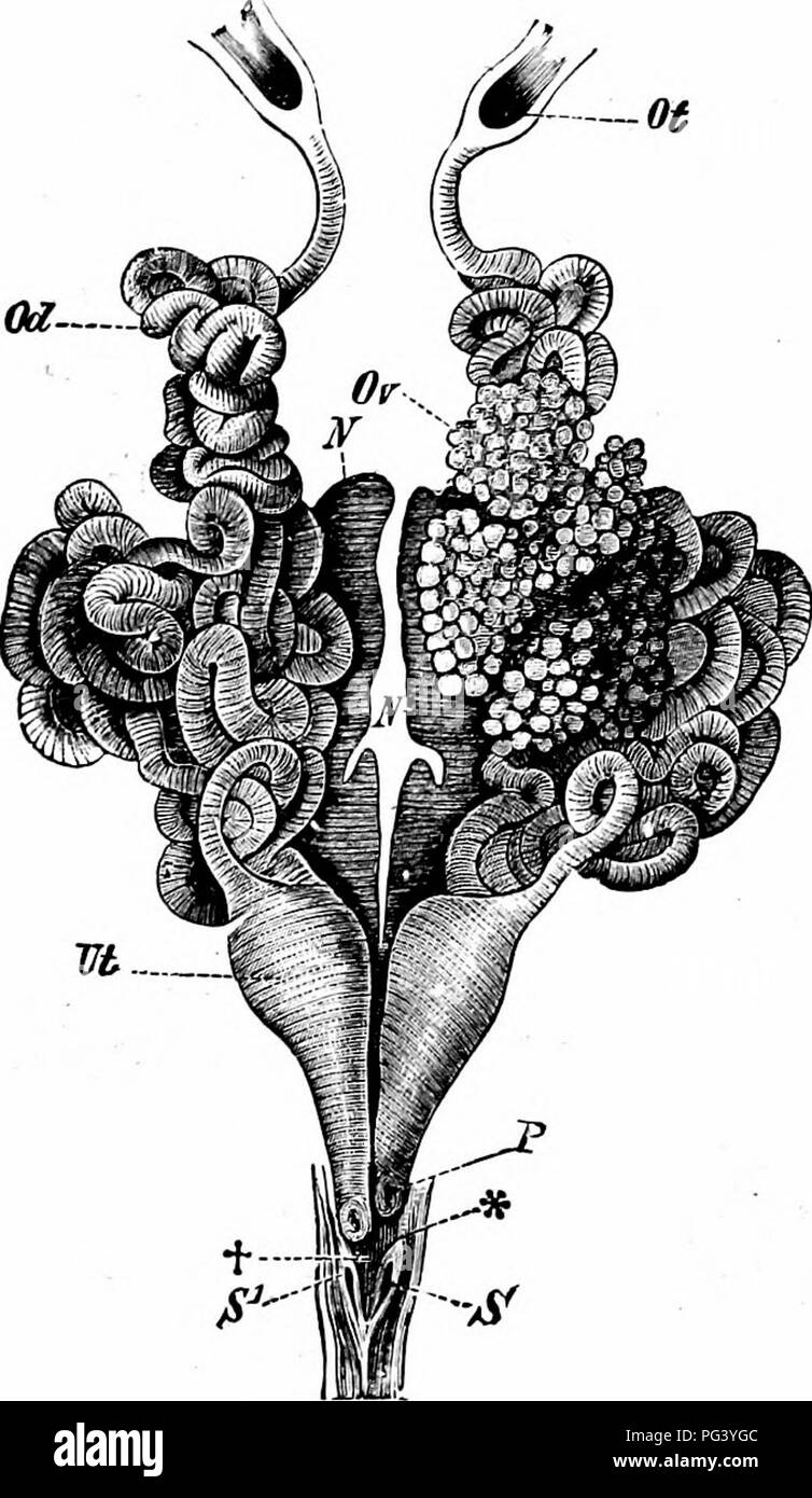A manual of zoology  XII PHYLUM CHORDATA 429 When the embryo escapes