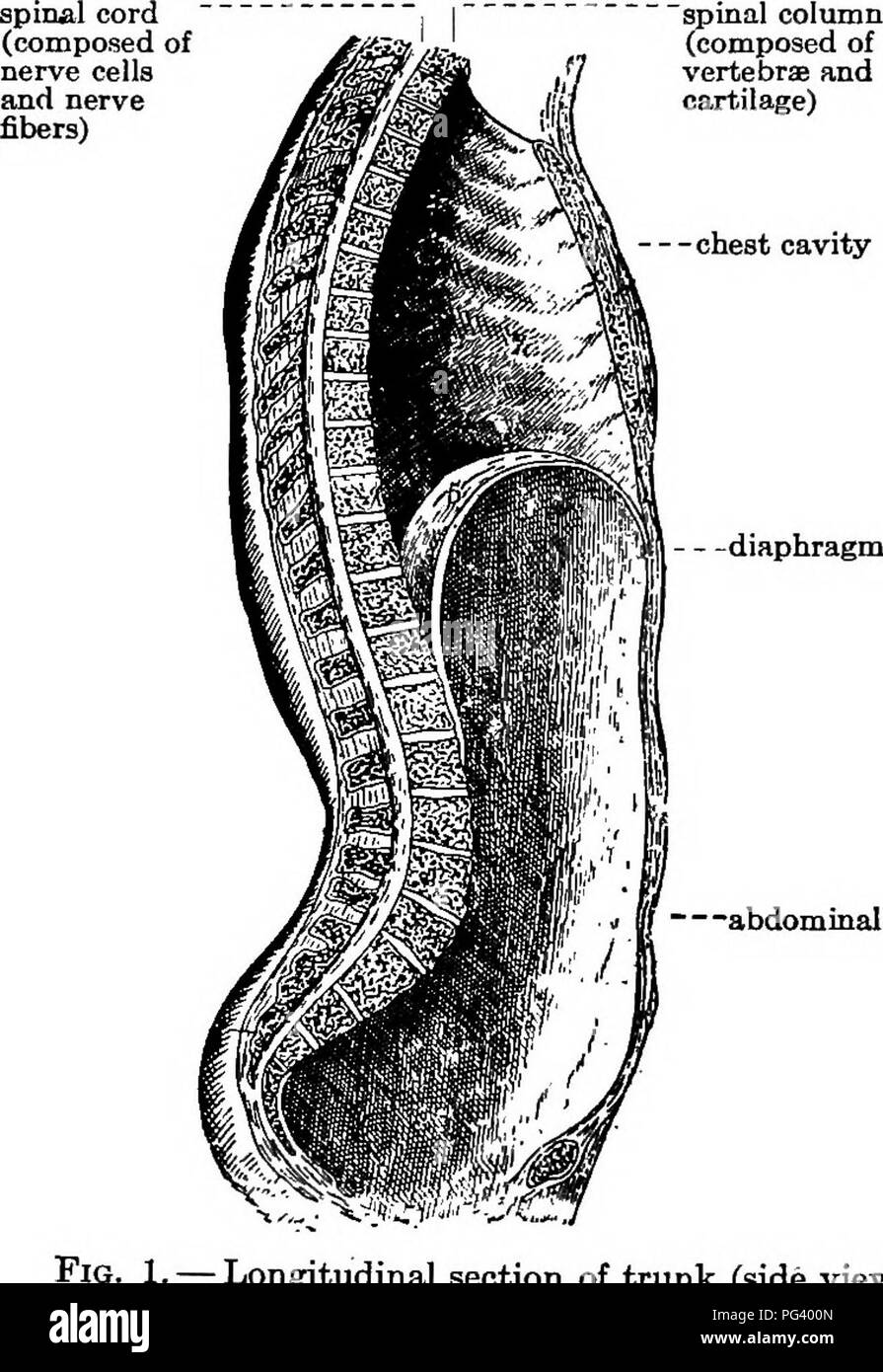 Elementary Biology Animal And Human Biology Human Biology Body