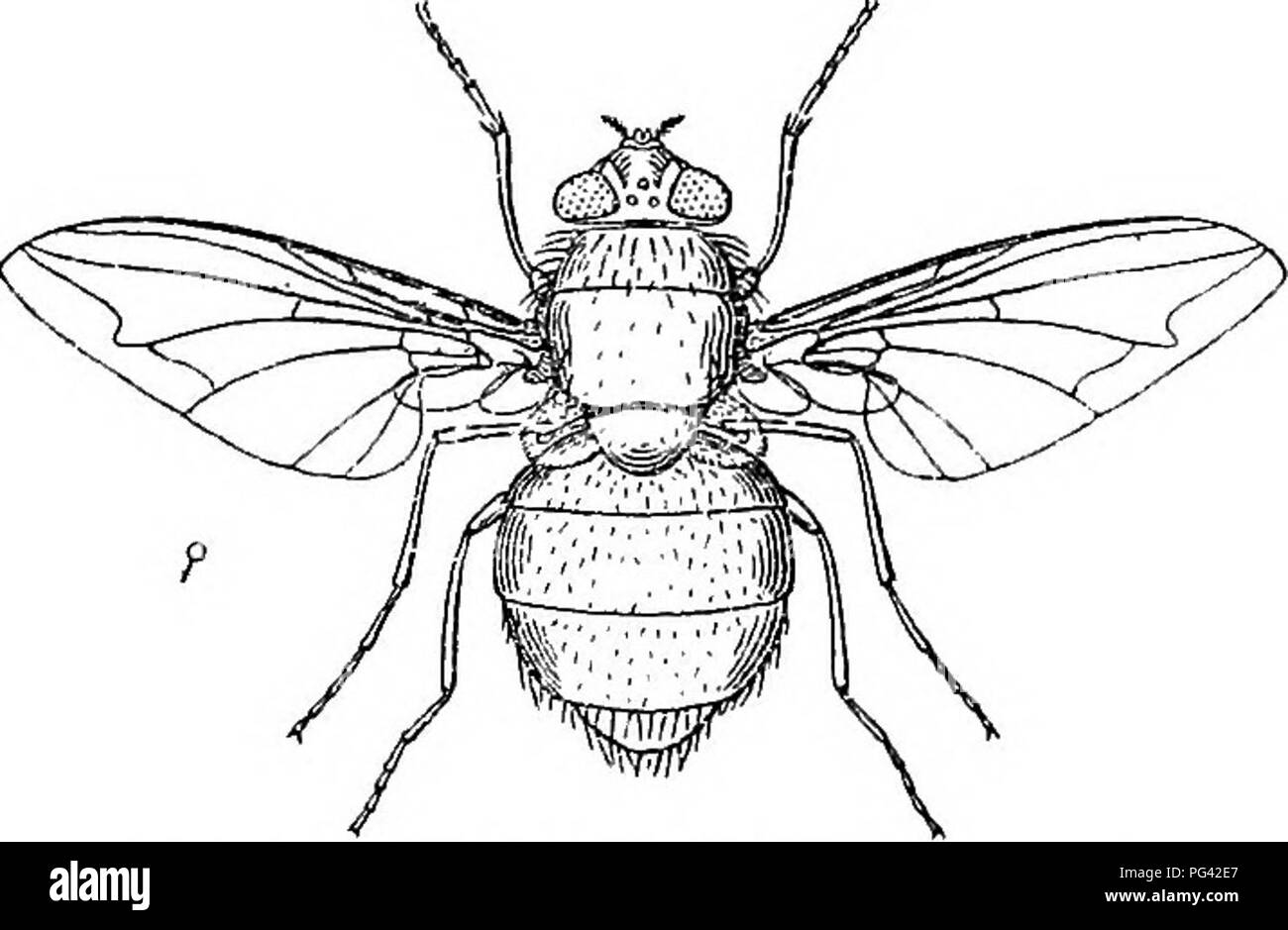 Injurious and useful insects
