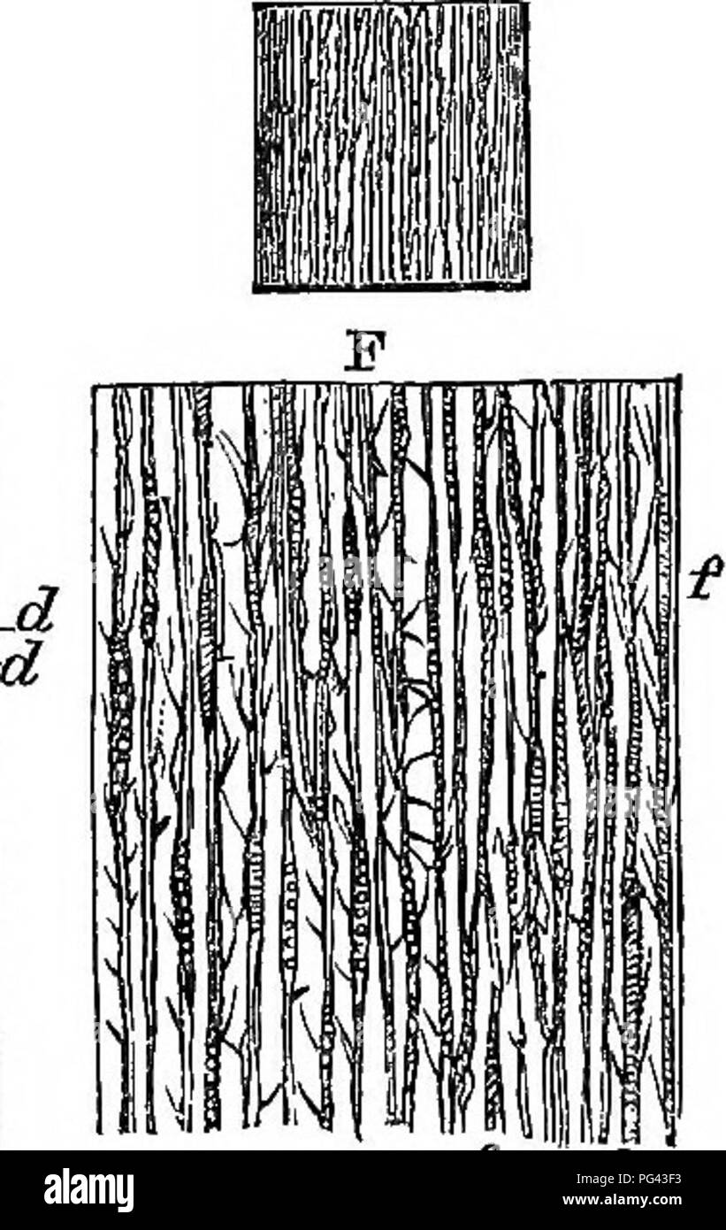 . A practical treatise on the use of the microscope, including the different methods of preparing and examining animal, vegetable, and mineral structures. Microscopes; Microscopy. IjK u jUilK^H^ g^i 1 i iPi IB 1 1. Fig. 226. :e £ plant, and a transverse section of a portion of the same mag- 22*. Please note that these images are extracted from scanned page images that may have been digitally enhanced for readability - coloration and appearance of these illustrations may not perfectly resemble the original work.. Quekett, John, 1815-1861. London, H. Bailliere; [etc. , etc. ] - Stock Image