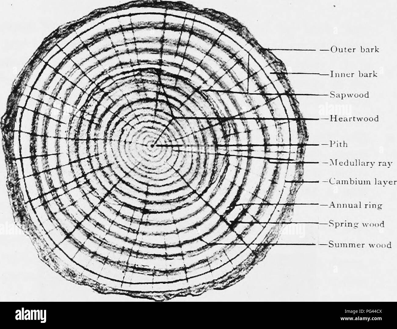 Parts Of A Tree Trunk Diagram