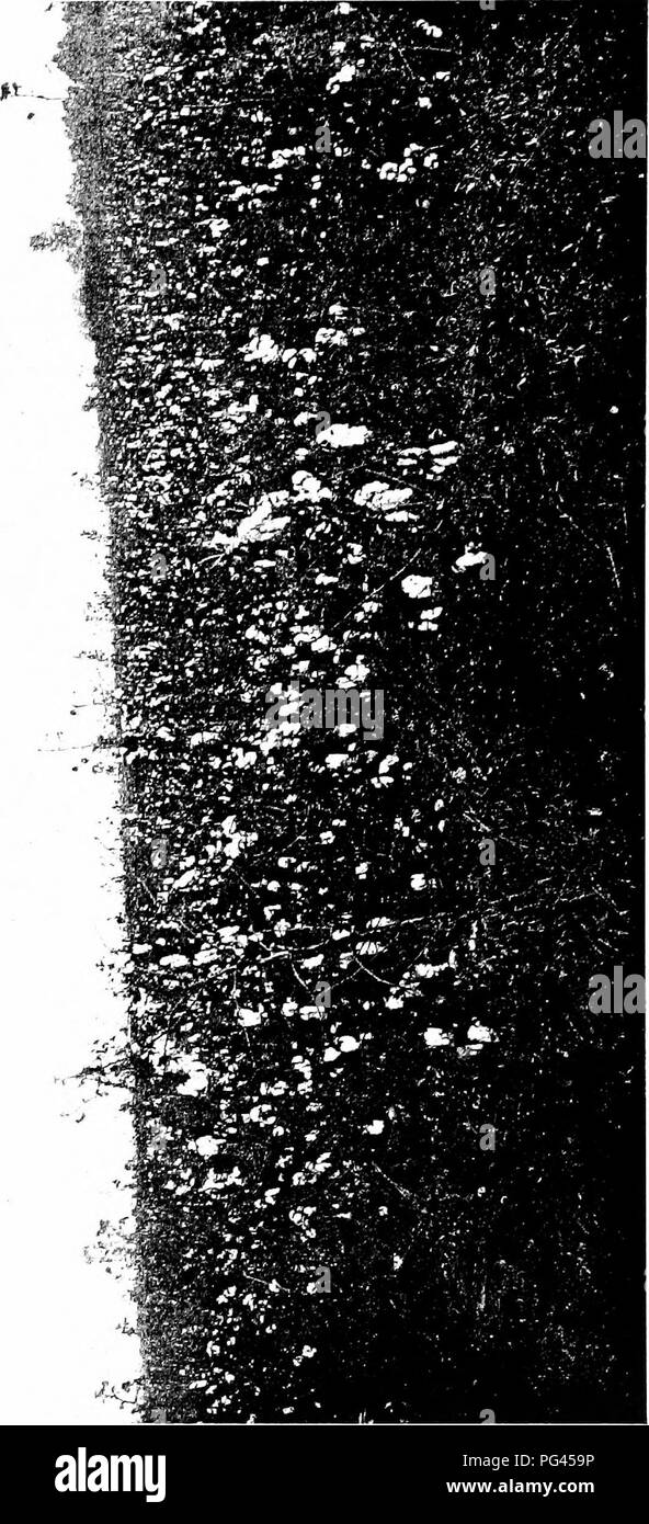 . Cotton : its cultivation, marketing, manufacture, and the problems of the cotton world . Cotton growing and manufacture. ' '-VW^i. — o :; a ^ -a. Please note that these images are extracted from scanned page images that may have been digitally enhanced for readability - coloration and appearance of these illustrations may not perfectly resemble the original work.. Burkett, Charles William, 1873-; Poe, Clarence Hamilton, 1881-. New York : Doubleday, Page & Company - Stock Image