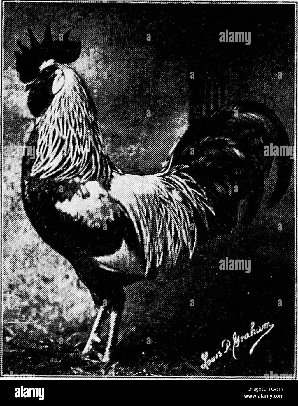 Principles and practice of poultry culture   Poultry  TYPES