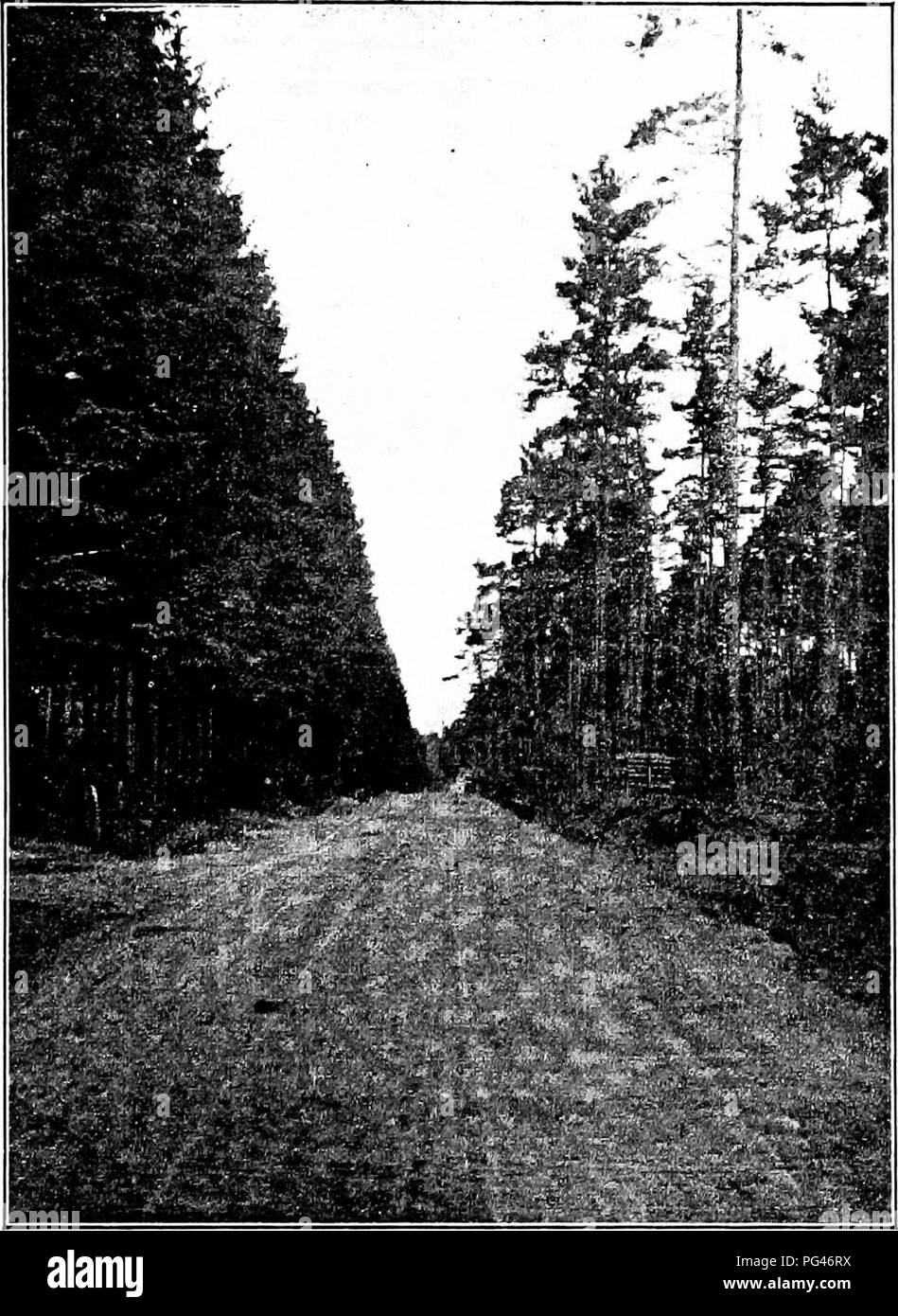 . Principles of American forestry . Forests and forestry. ^To fare page 70.1. Fig. 14.—Wood road and firebreak, Giessen, Germany, in Norway- Spruce Forest.. Please note that these images are extracted from scanned page images that may have been digitally enhanced for readability - coloration and appearance of these illustrations may not perfectly resemble the original work.. Green, Samuel B. (Samuel Bowdlear), 1859-1910. New York, J. Wiley & Sons - Stock Image
