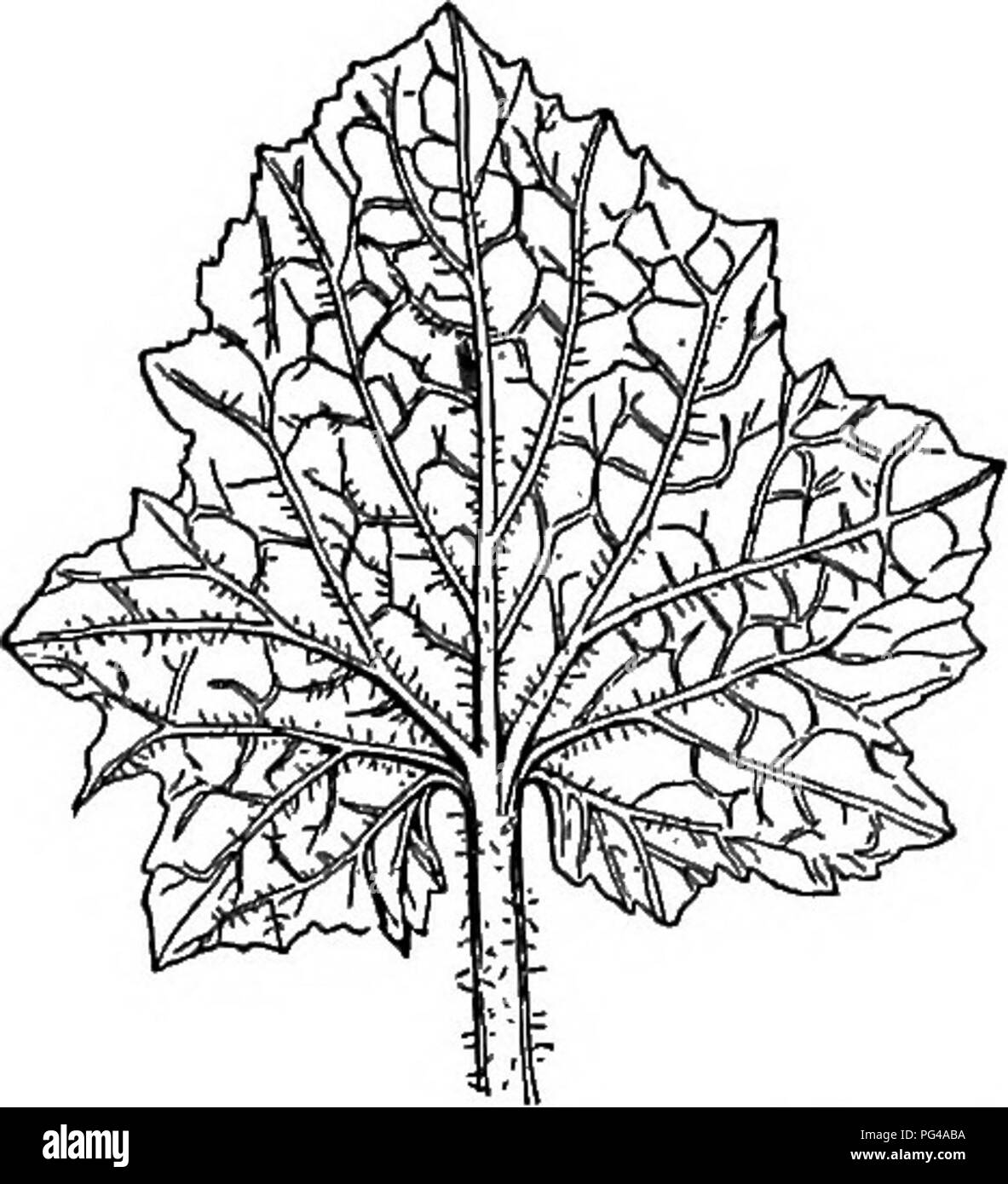 identifying plants stock photos identifying plants stock images Live Aquarium Plants Fish elements of botany botany botany 88 elements op botany leaves themselves
