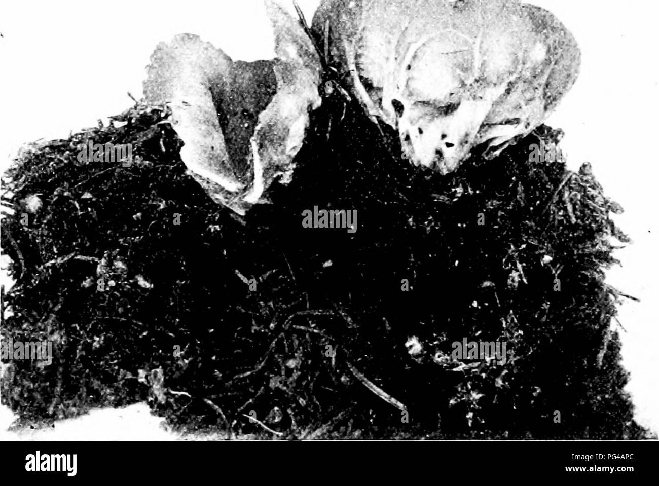 Fli Black and White Stock Photos & Images - Alamy